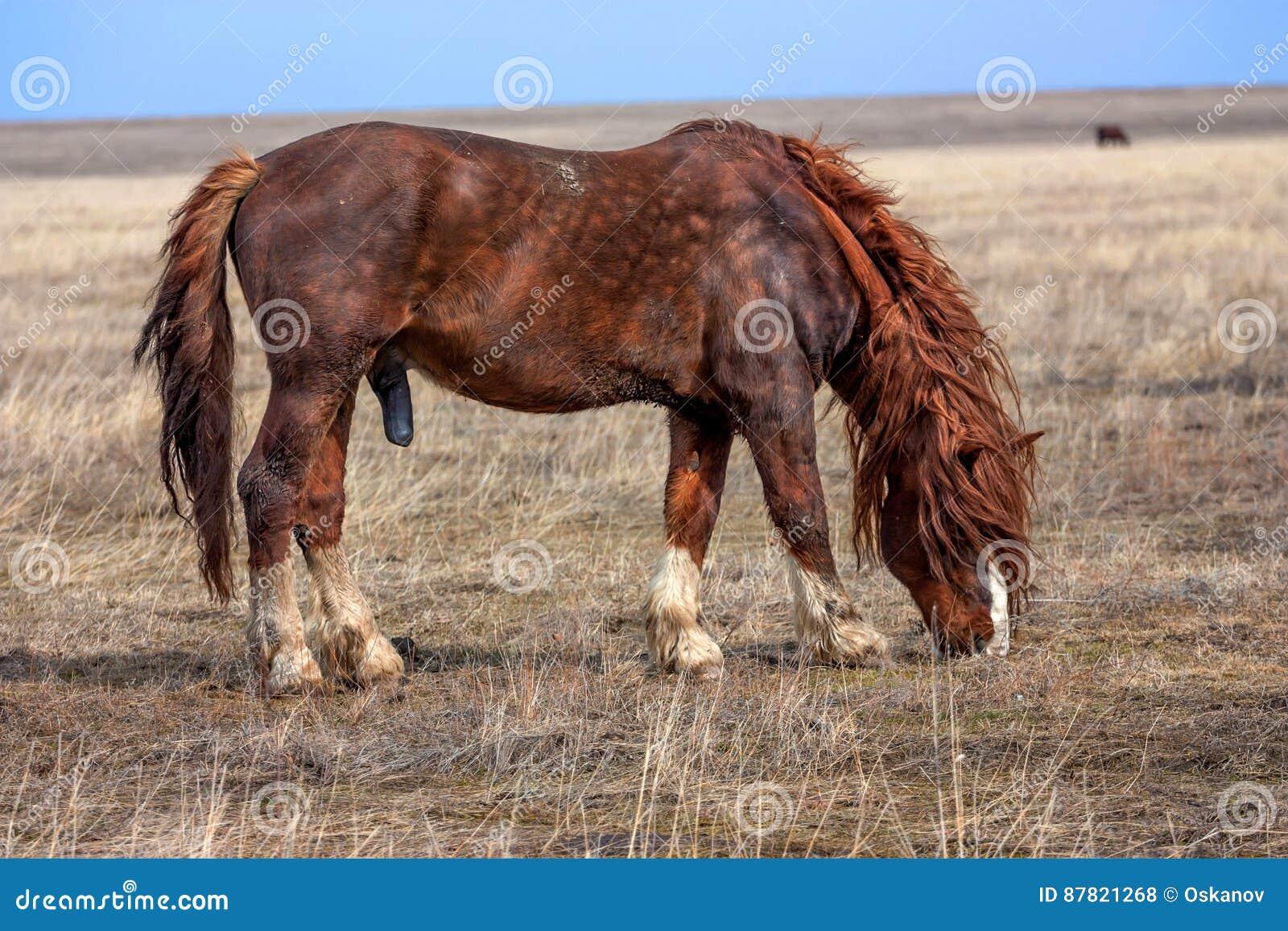Come Pulire il Fodero di un Cavallo (con Immagini)