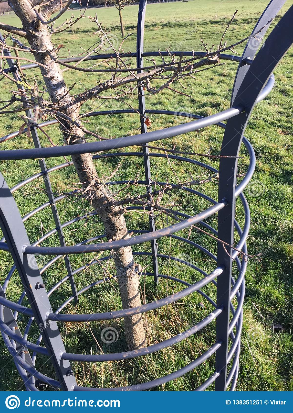 Stalowej ramy chronienia młody drzewo ii