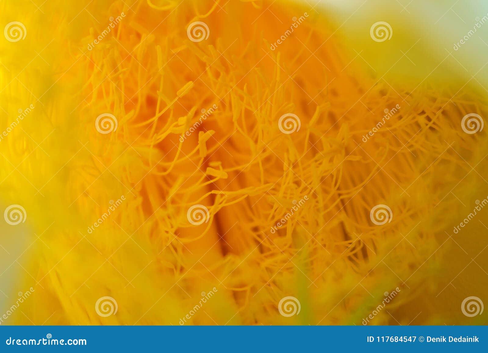 Stamen smoka kwiat