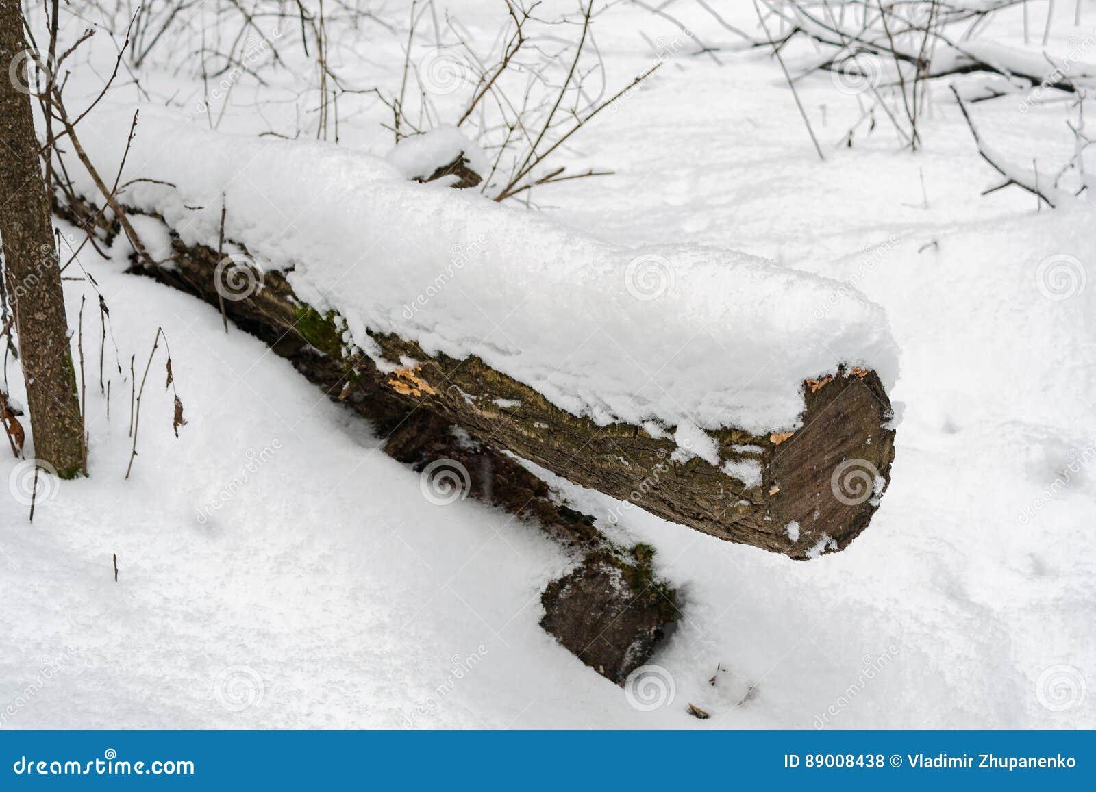 Stammen av ett avverkat träd som täckas med den insnöade vinterskogen