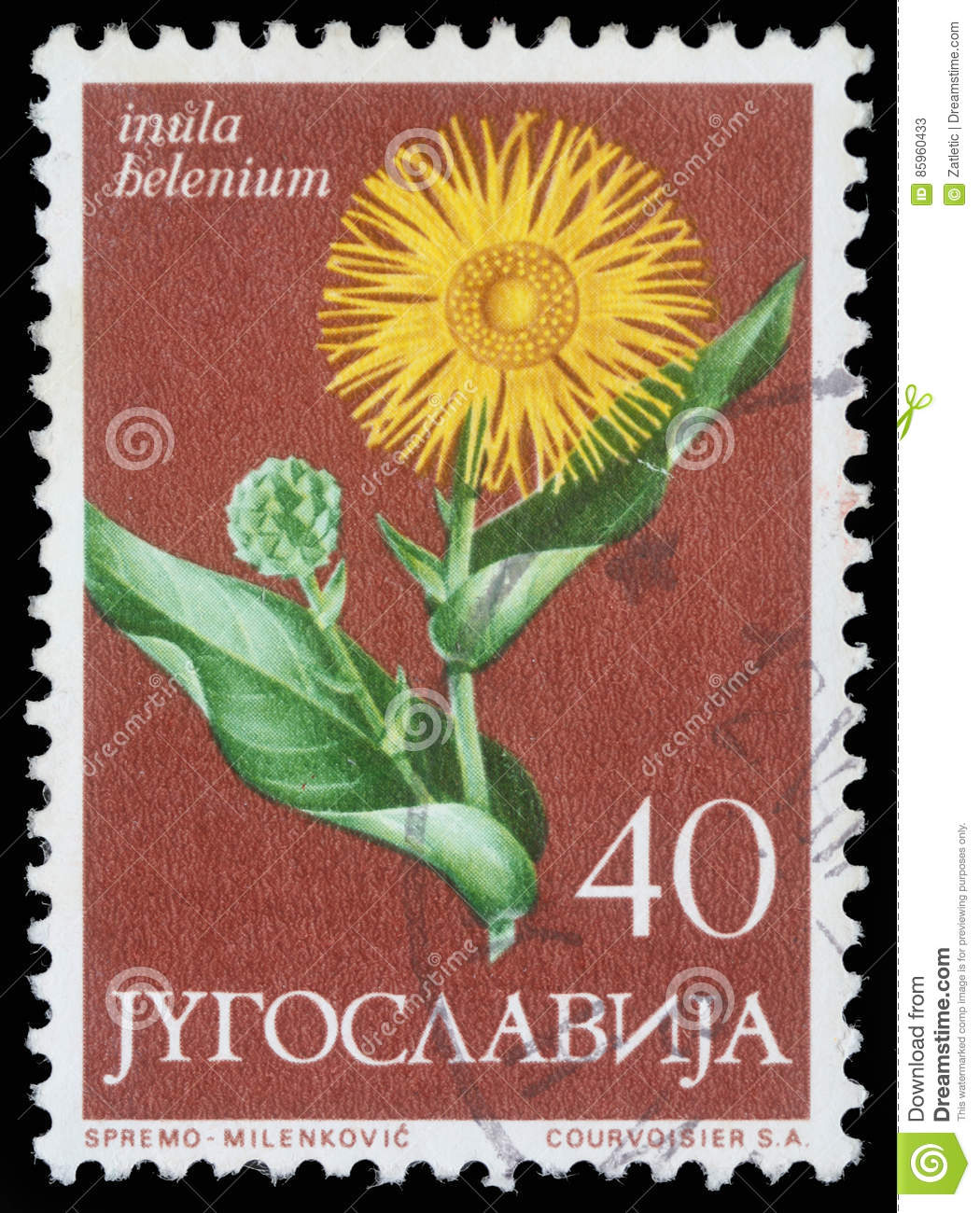 Stamp printed in Yugoslavia shows elecampane