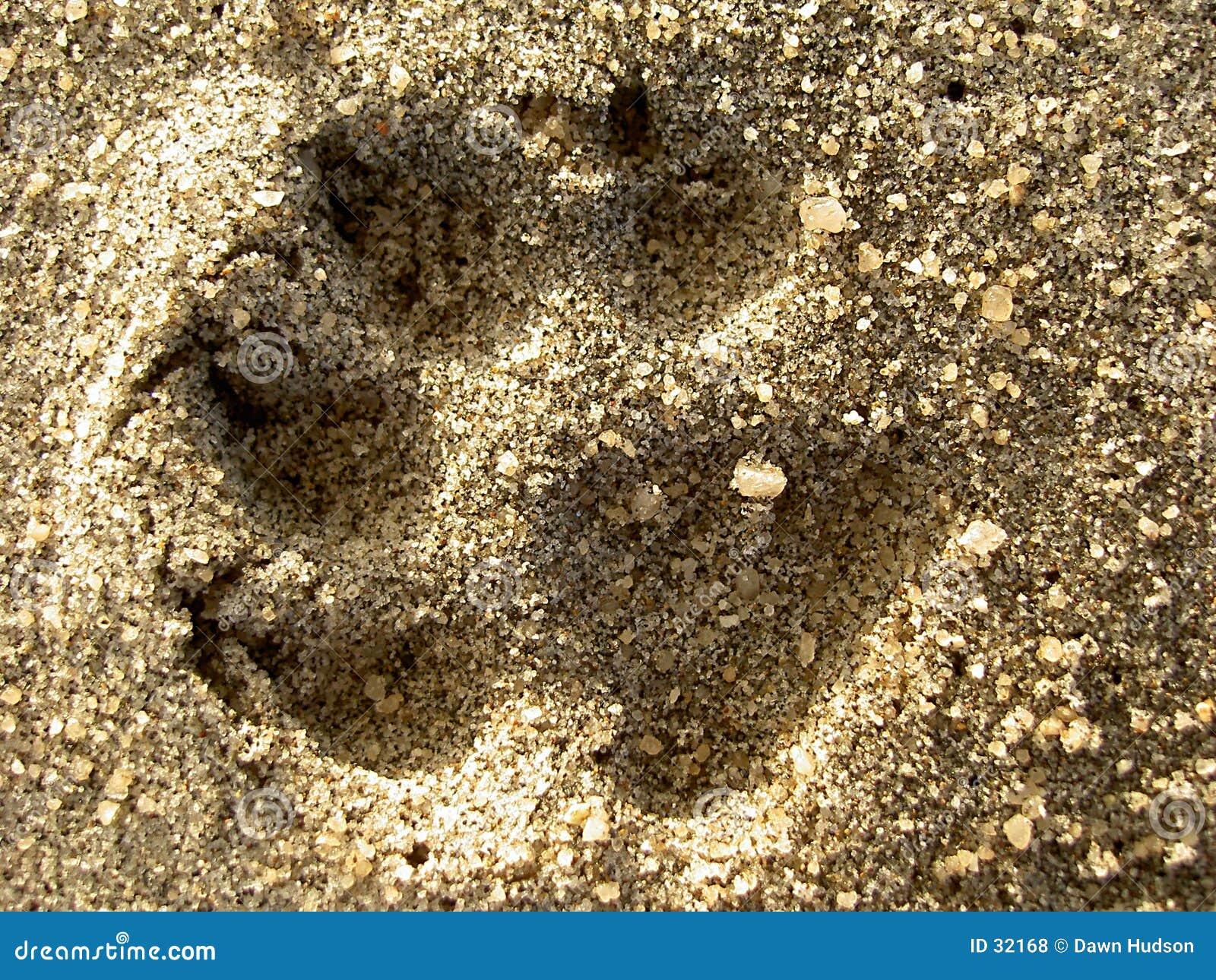 Stampa del cane nella sabbia