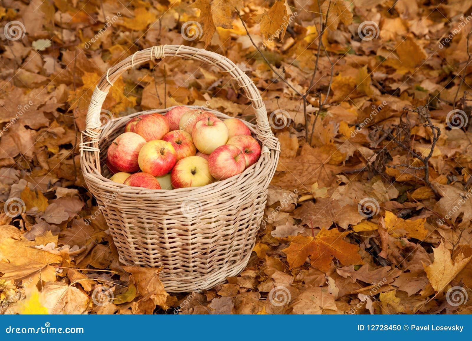 Stand för lönn för leaves för äpplekorgjord