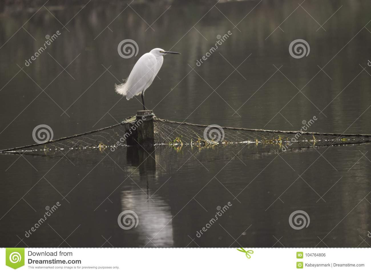 Chinese white crane bjrd standing on post with fishing net across lake, day