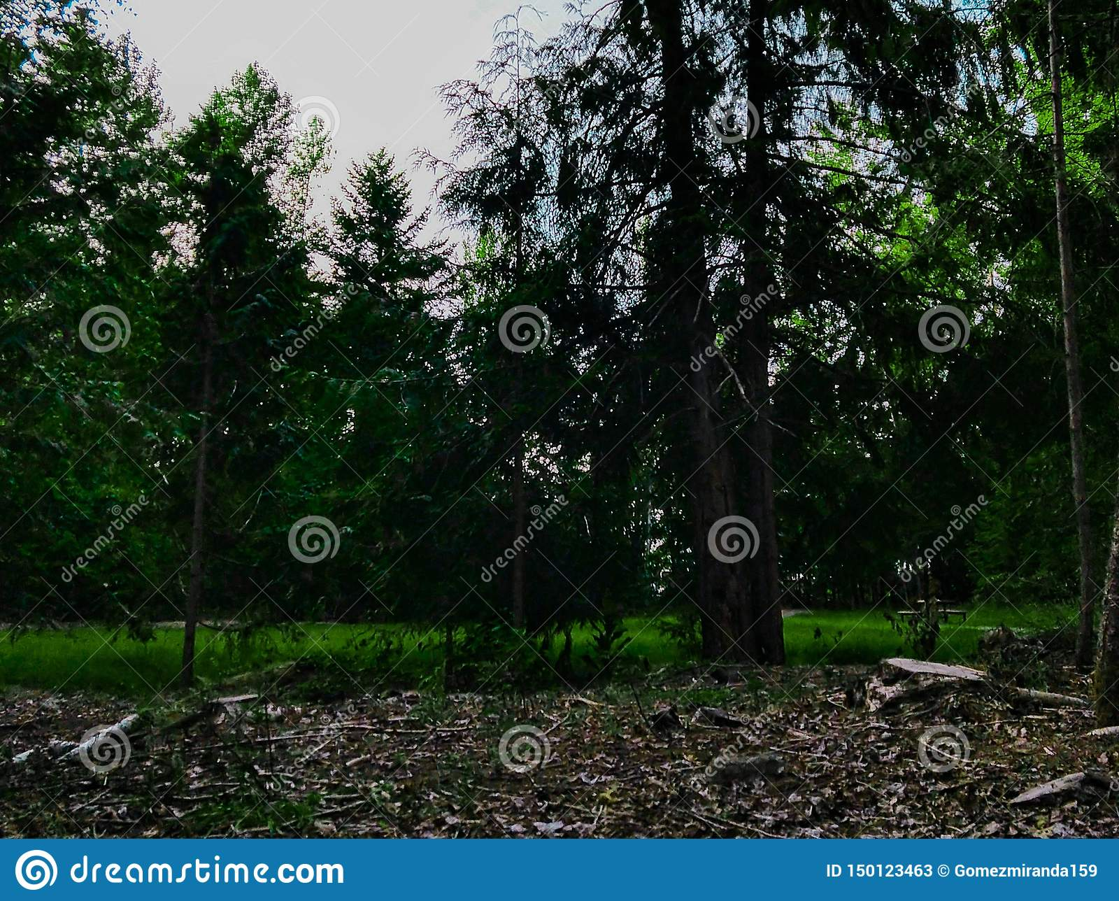 Pacific Northwest wooded landscape