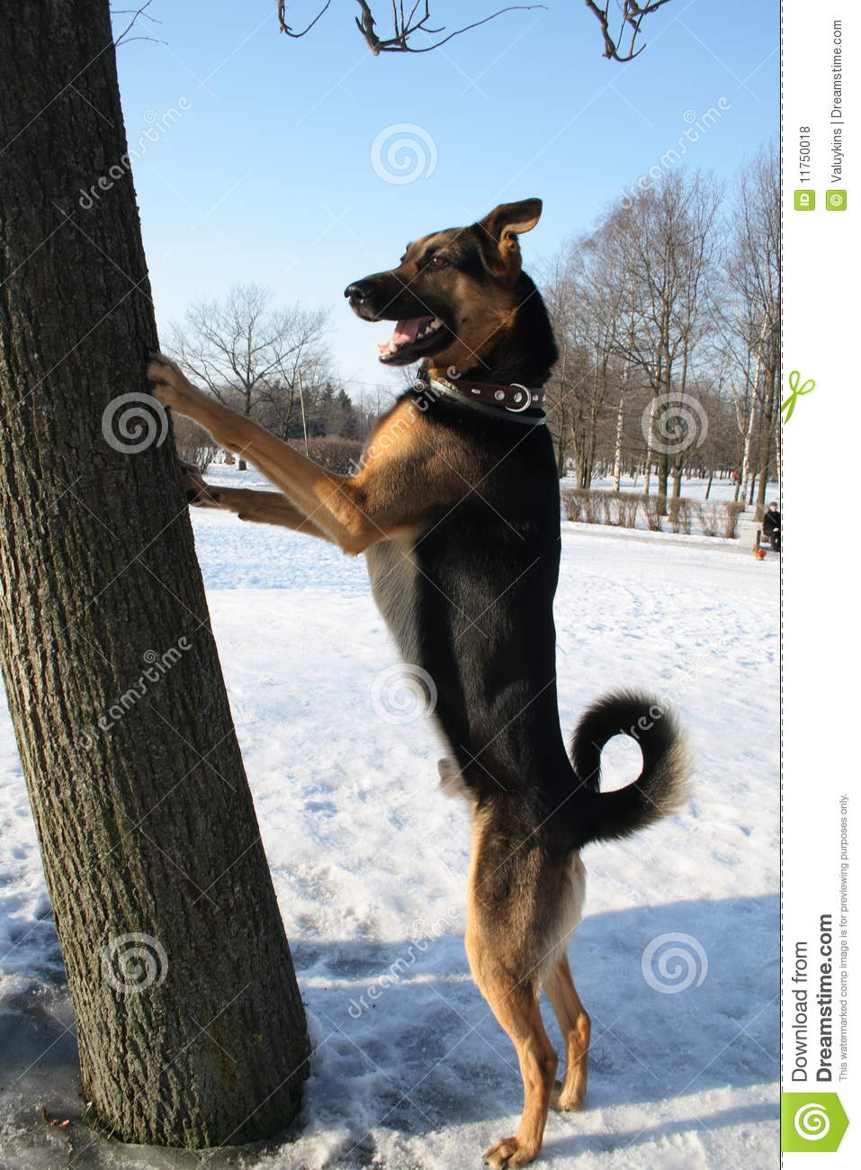 standing dog royalty free stock photos   image 11750018