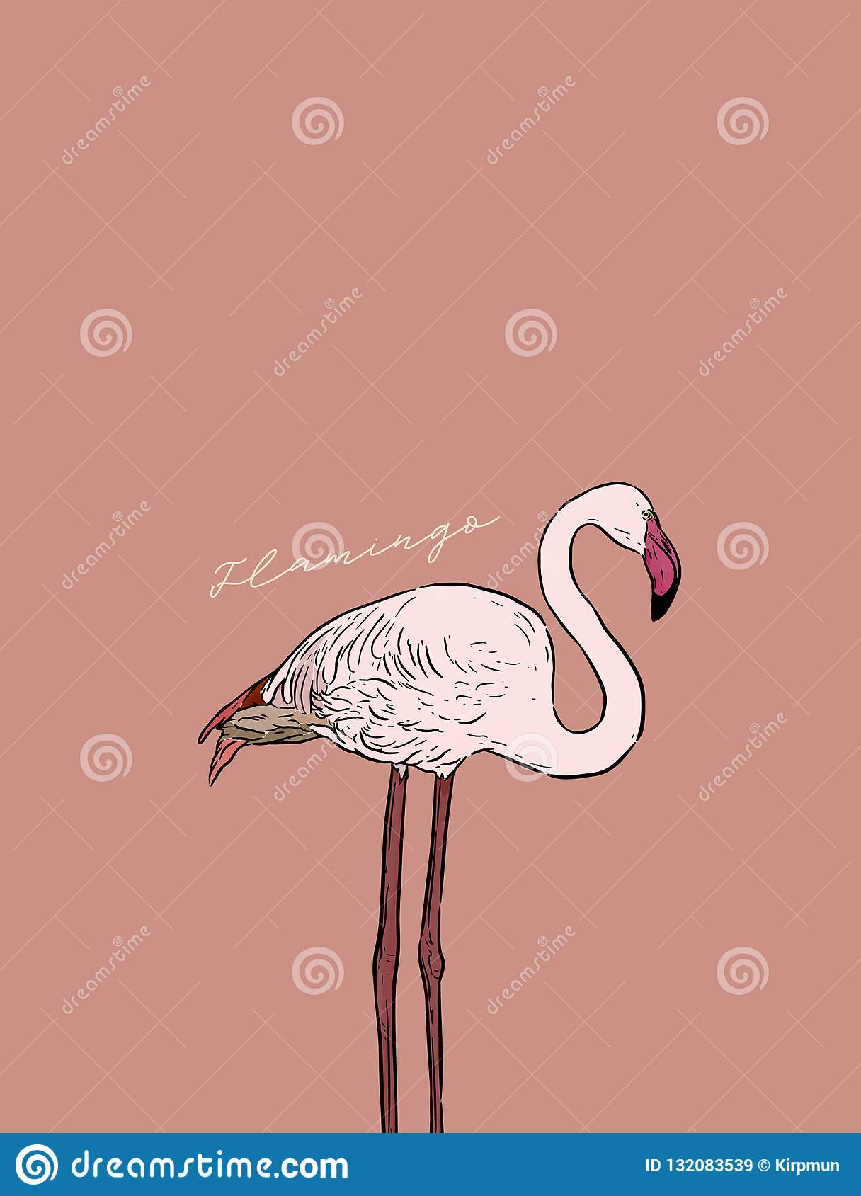 Flamingo Bird Hand Draw Vector Stock Vector Illustration Of