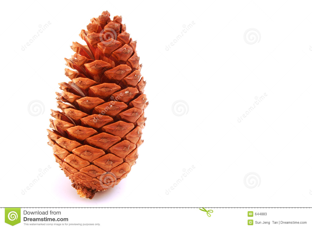Download Standing - pine cone stock image. Image of fruit, macro - 644883