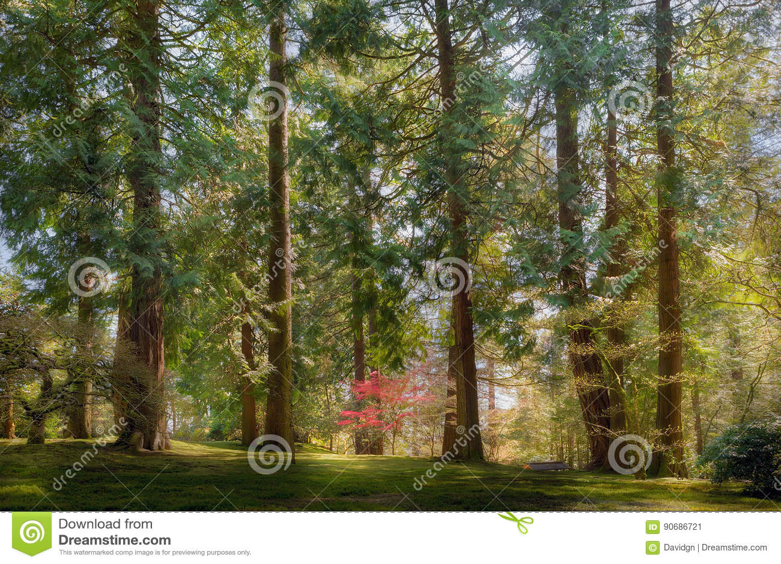 Standing Tall Amongst The Giants Trees In Portland Japanese Garden ...