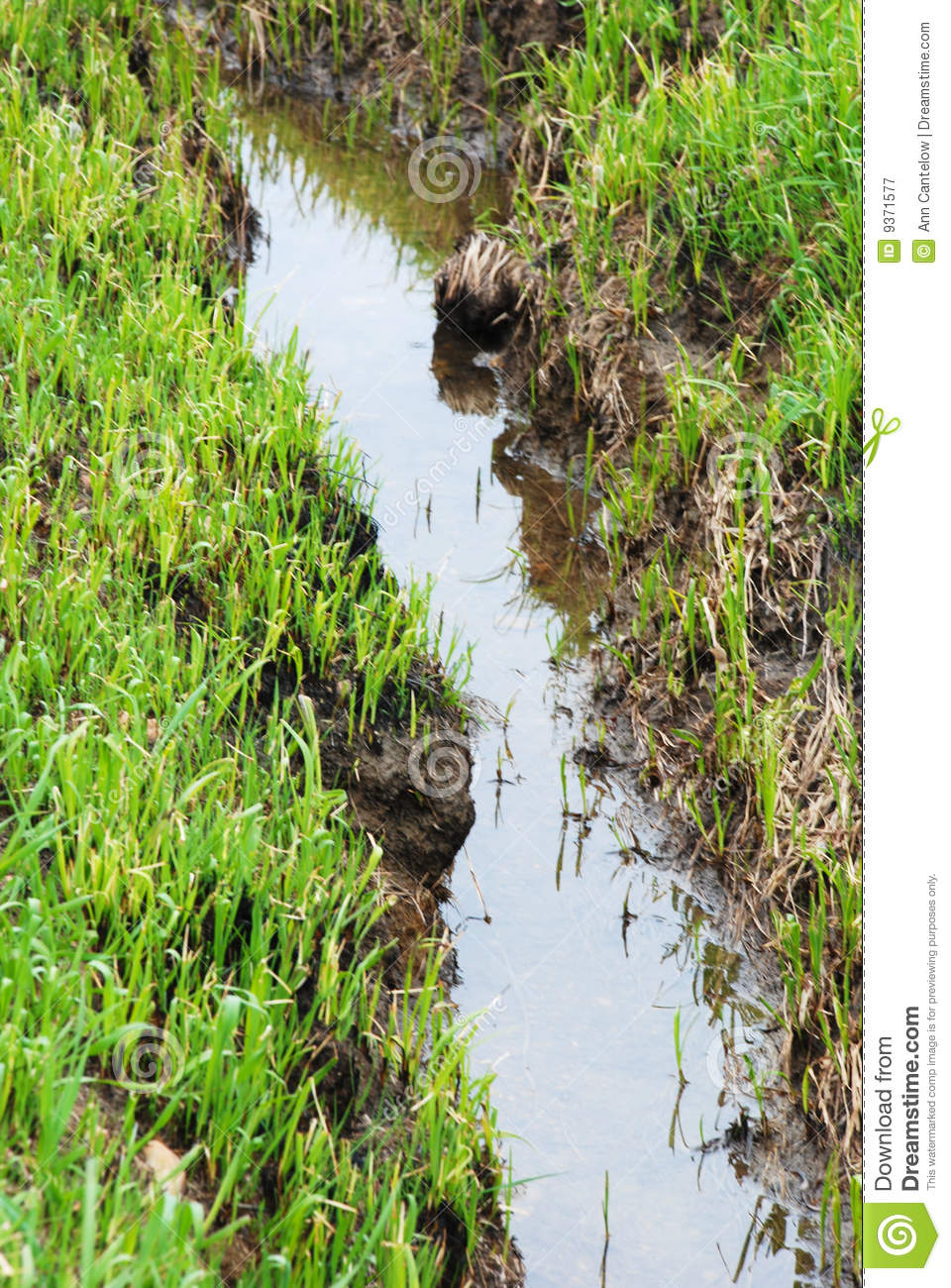 Standing Water In A Small Ditch Or Puddle Royalty Free Stock Photography Image 9371577