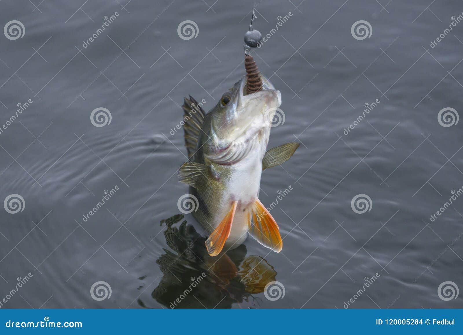 Stangenfischtrophäe gefangen im Wasser Fischenhintergrund