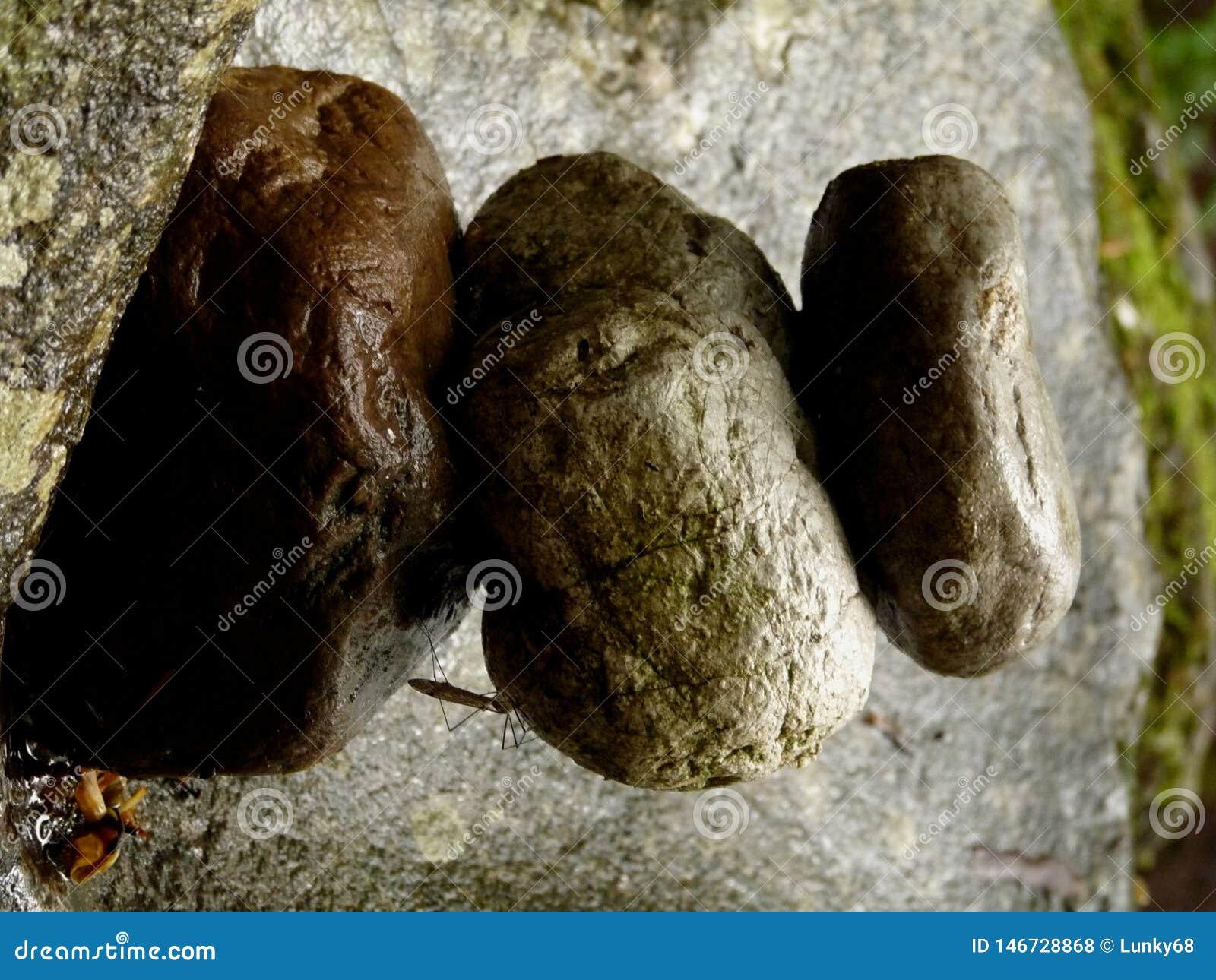 Stapel Zensteine auf Felsen am magischen Platz im Wald