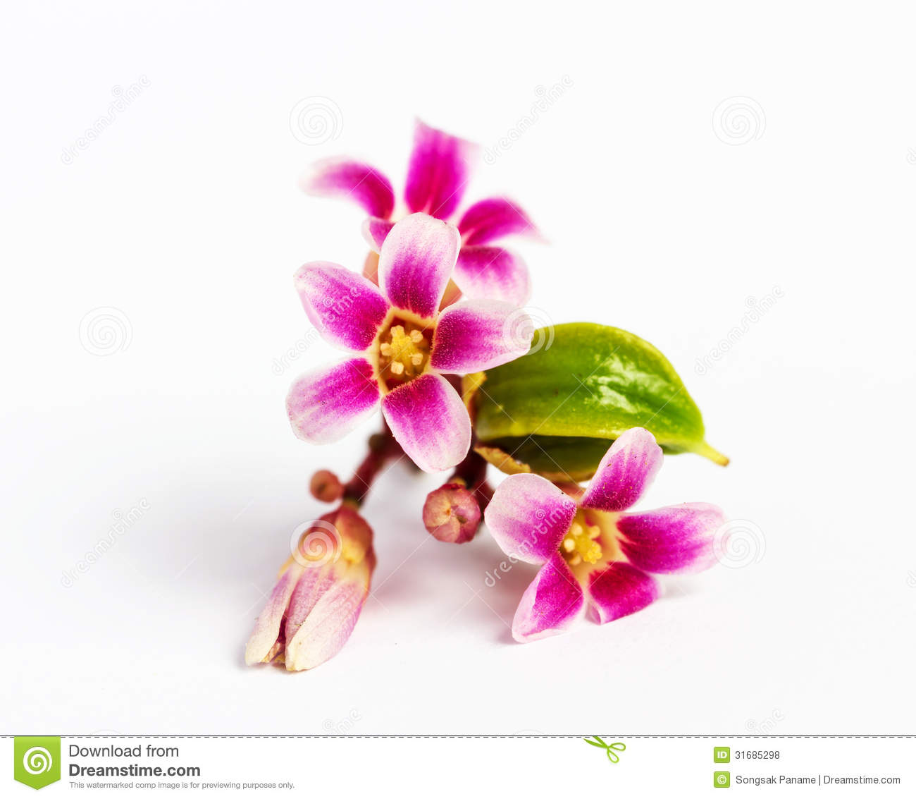 Royalty Free Stock Photo. Download Star Apple Fruit Flower ...