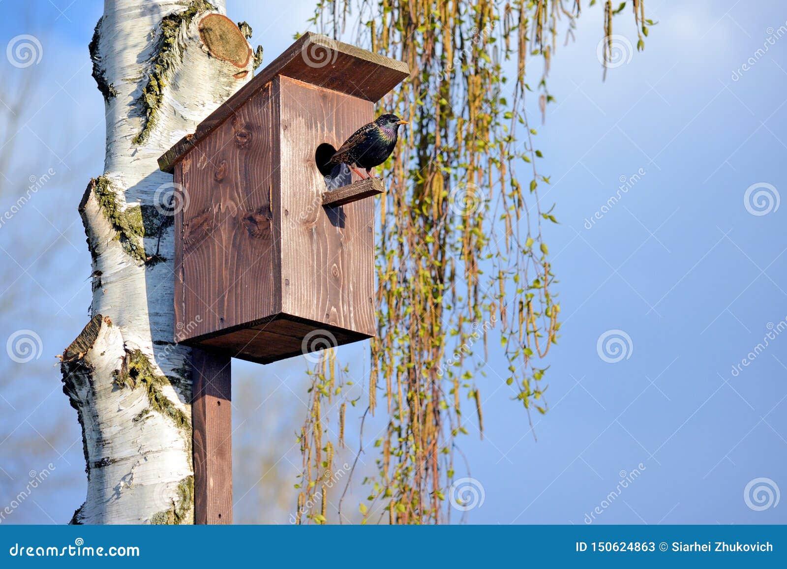 Star auf dem Vogelhaus