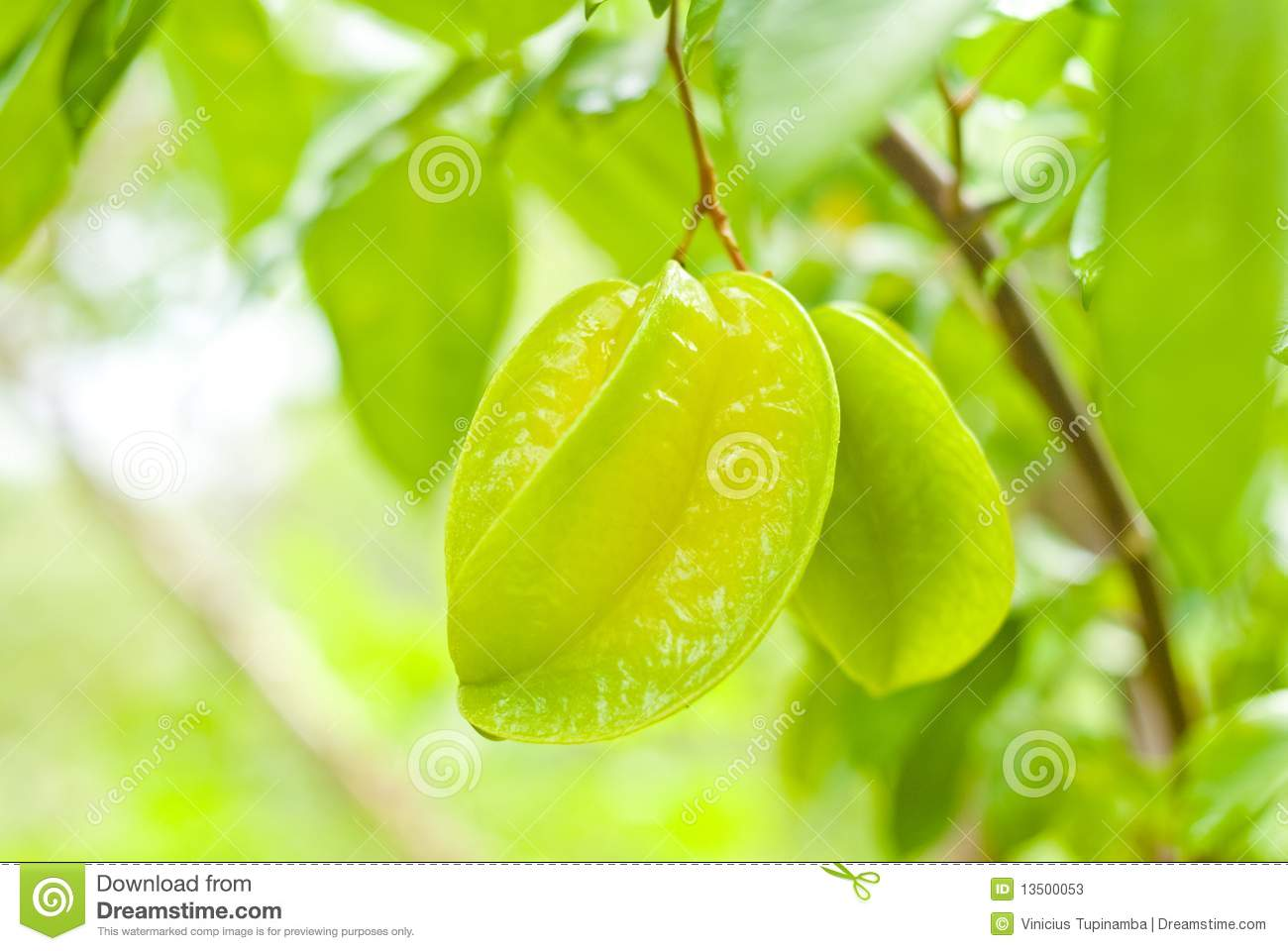 Guavas Clipart Star Fruit Stock Photo...