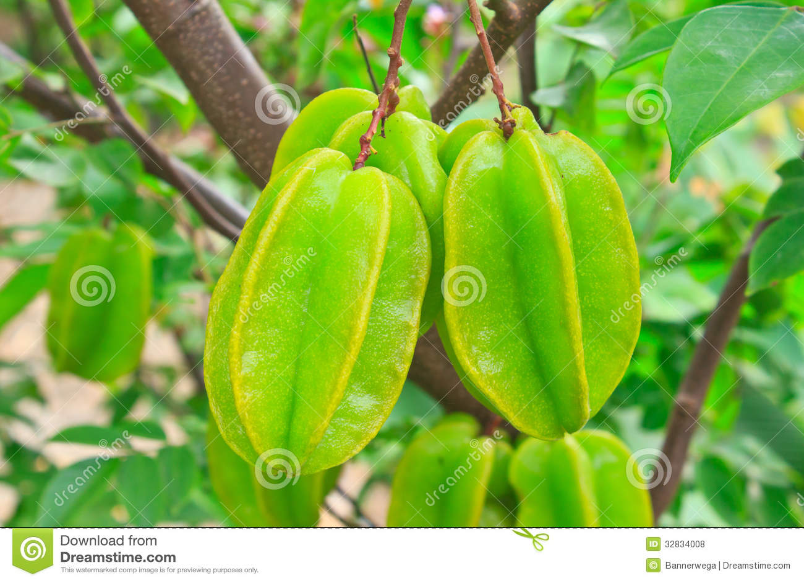Star Fruit Royalty Free Stock Photos - Image: 32834008