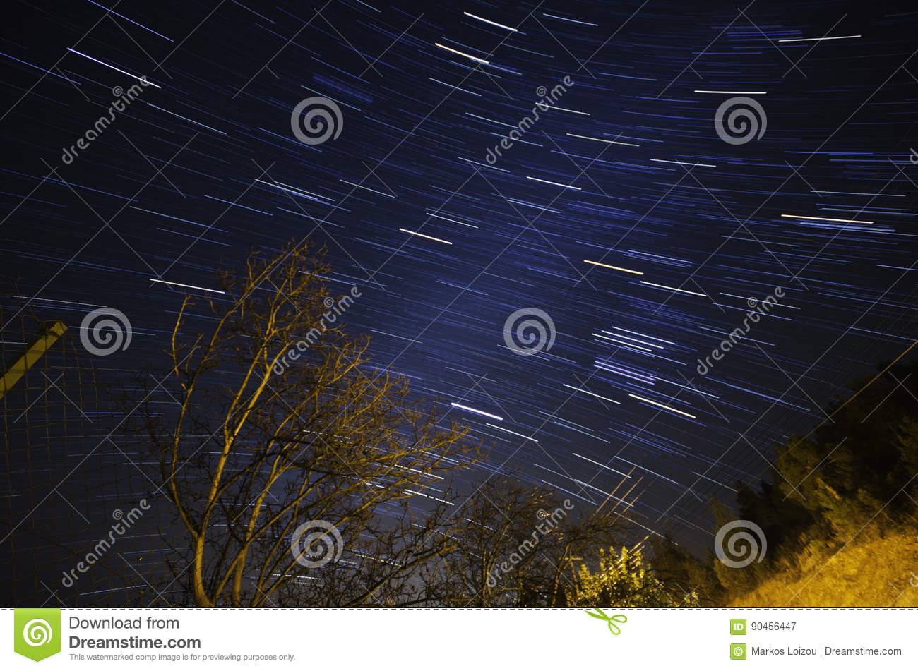 Star trails and leafless tree