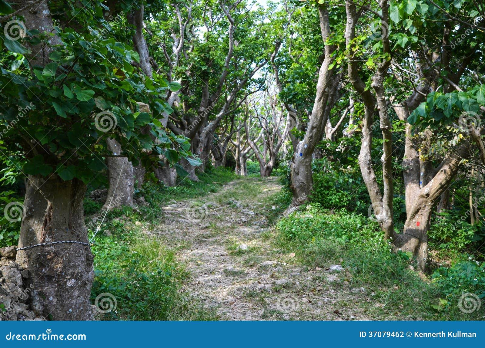 Download Stara aleja zdjęcie stock. Obraz złożonej z wieś, natura - 37079462