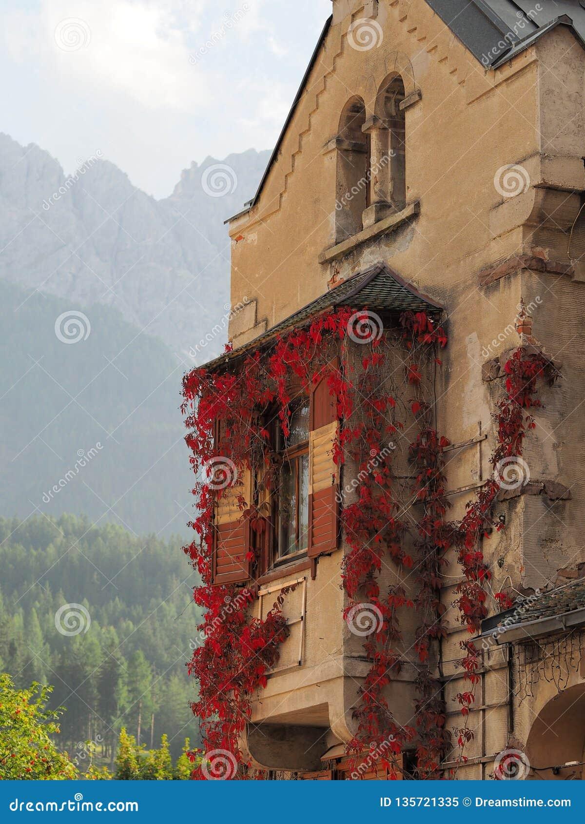 Stara budynek fasada z czerwonym winogradem
