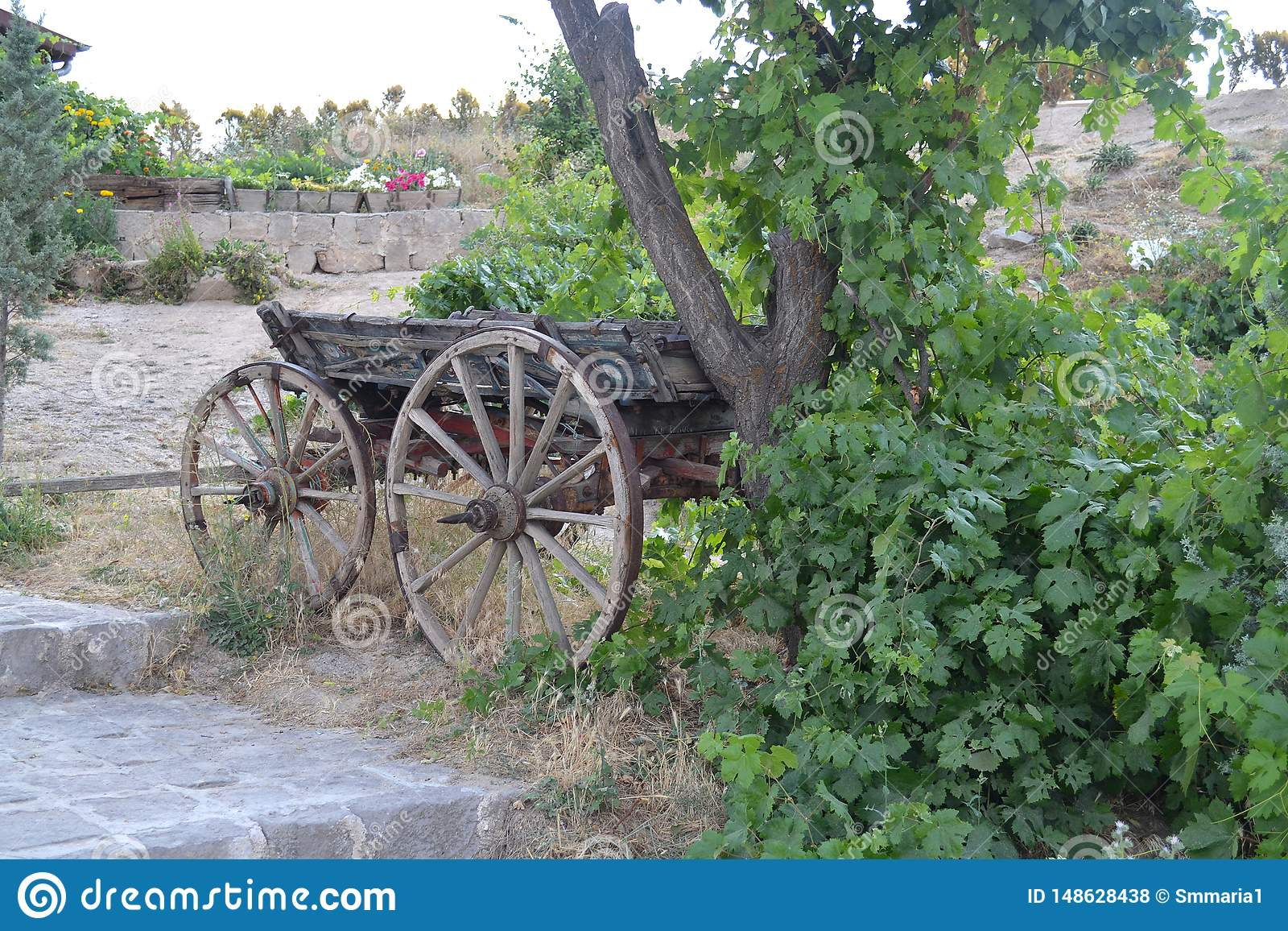 Stara cart