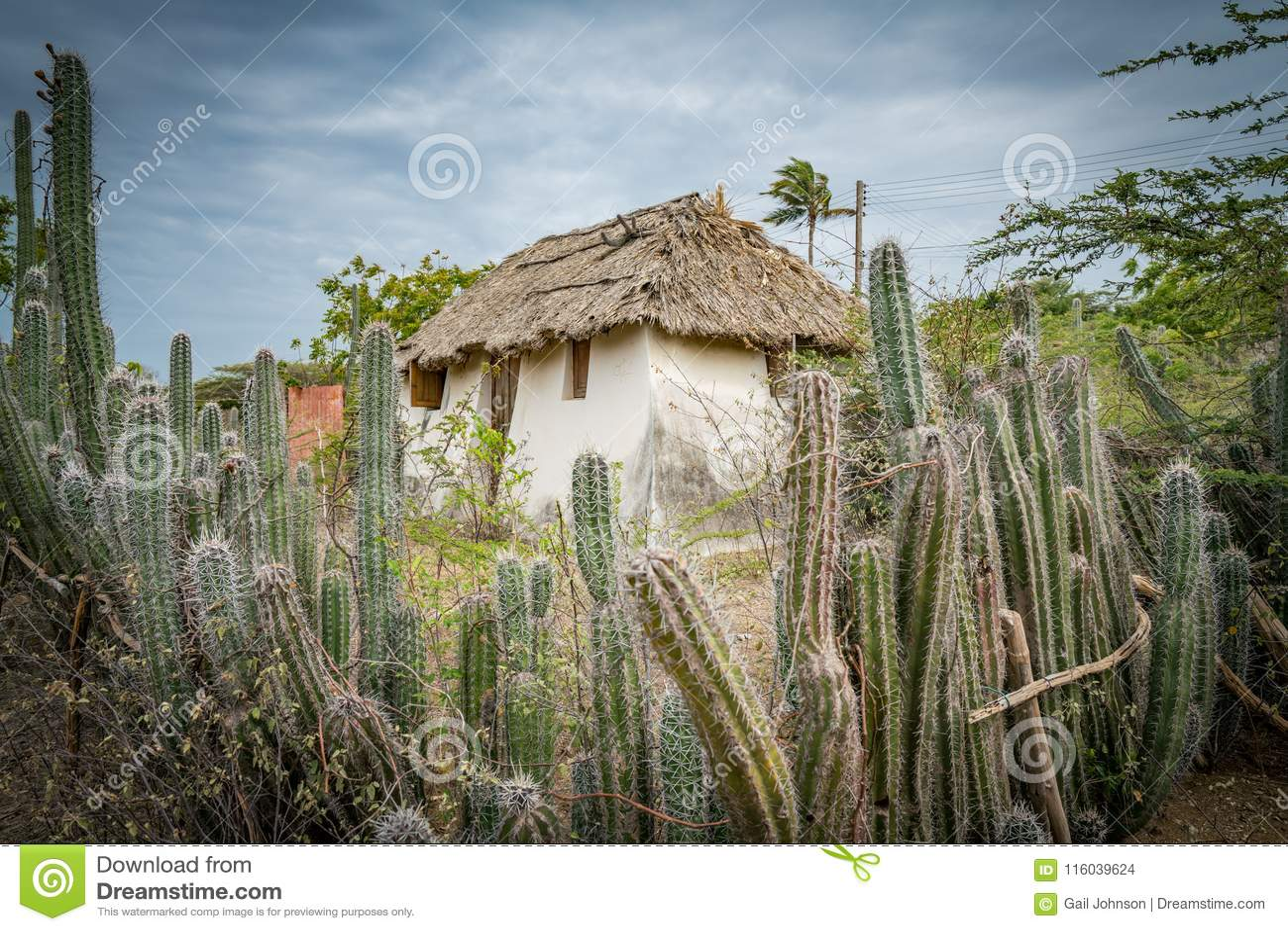 Stara Niewolnicza buda - kaktusa Curacao płotowi widoki
