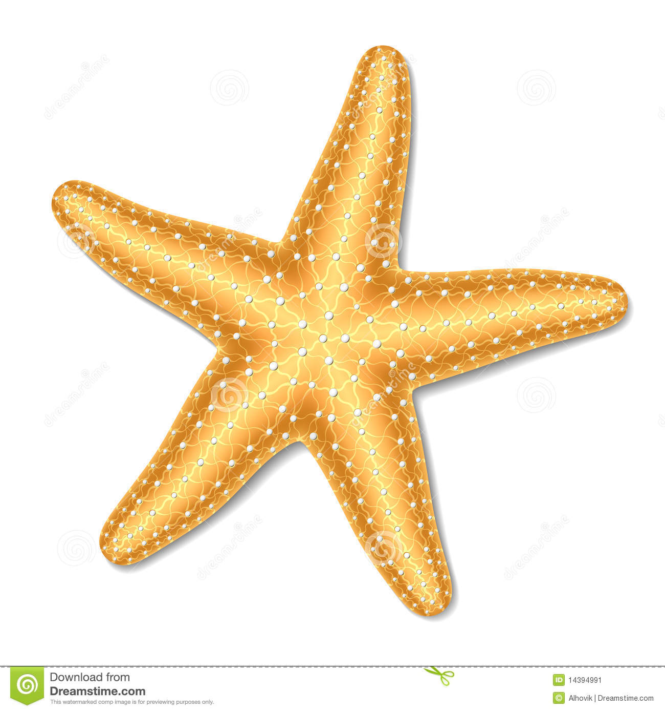 starfish stock photos images pictures 50 773 images