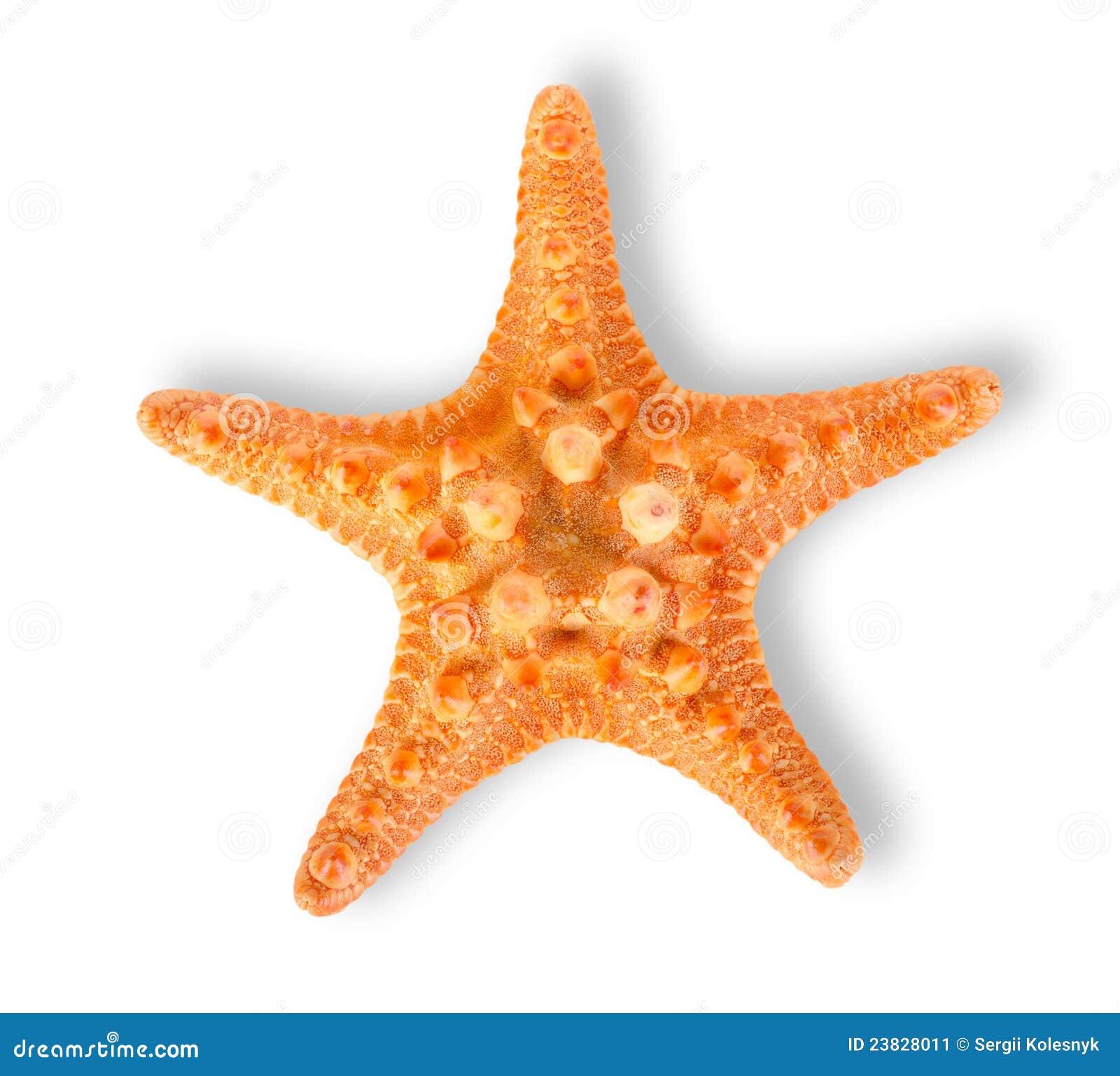 Starfish Stock Image - Image: 23828011