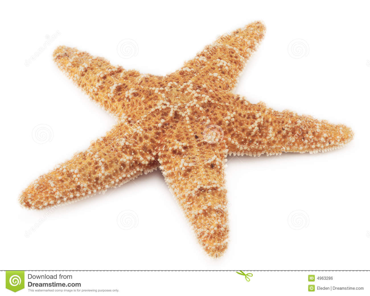Starfish Royalty Free Stock Image - Image: 4963286