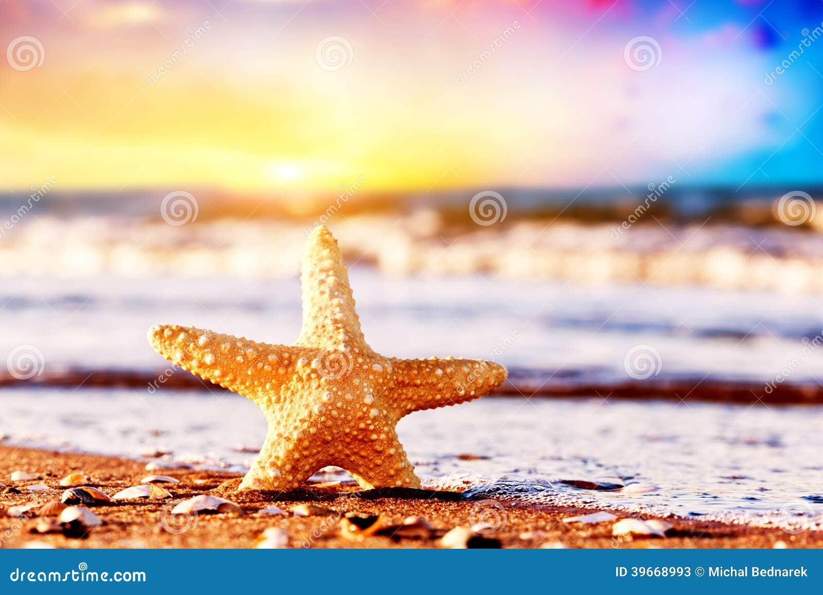 Starfish auf dem Strand bei warmem Sonnenuntergang. Reise, Ferien