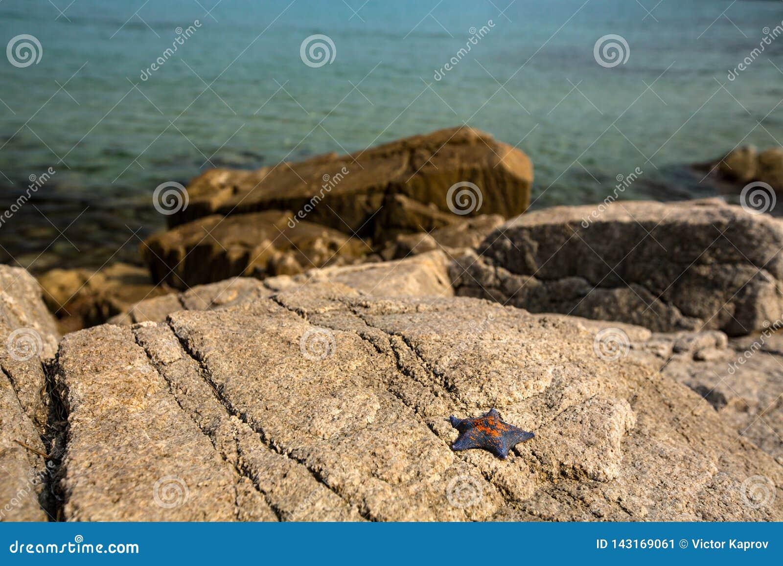 Starfish auf dem Ufer auf den Felsen im sonnigen Wetter
