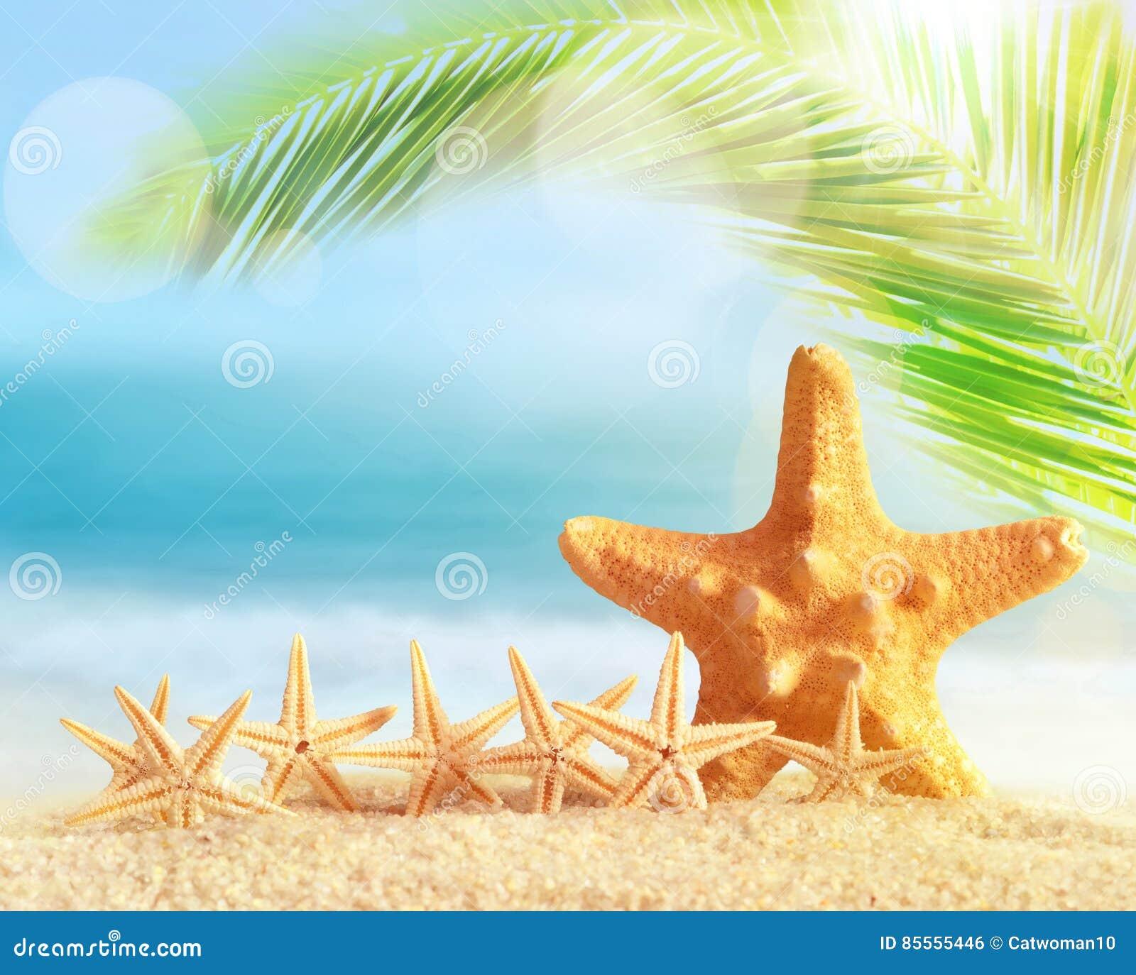 Starfish auf Sandy-Strand