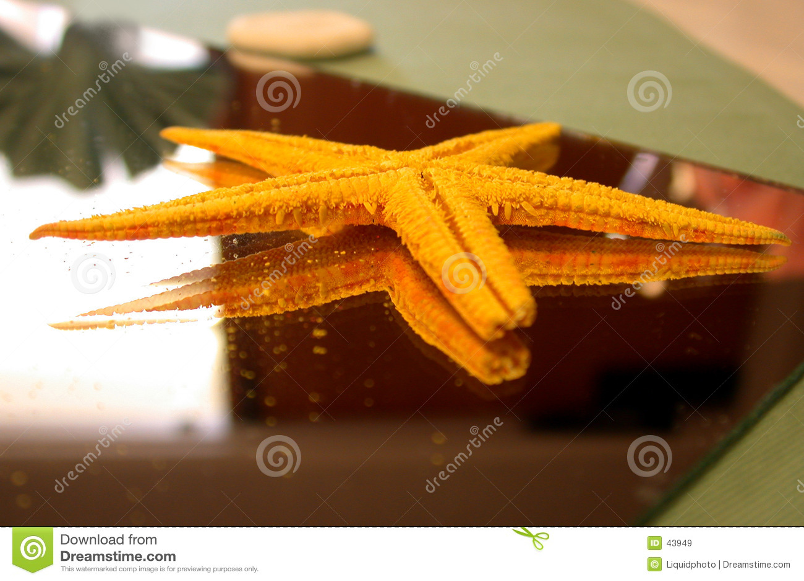Starfish auf Spiegel