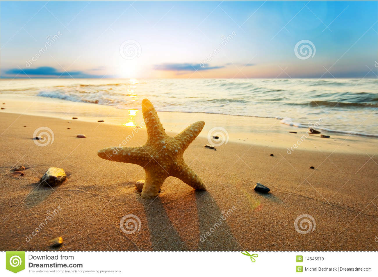 Starfish On The Beach Royalty Free Stock Images - Image ...
