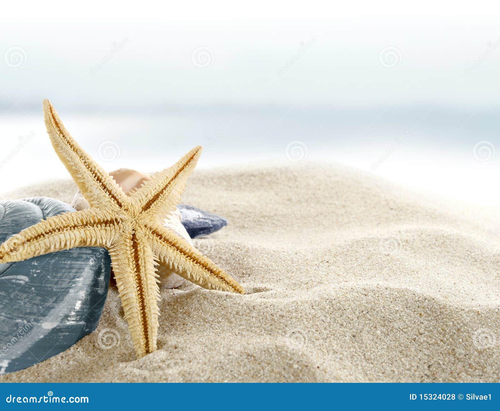 Starfish On The Beach Royalty Free Stock Photos - Image ...