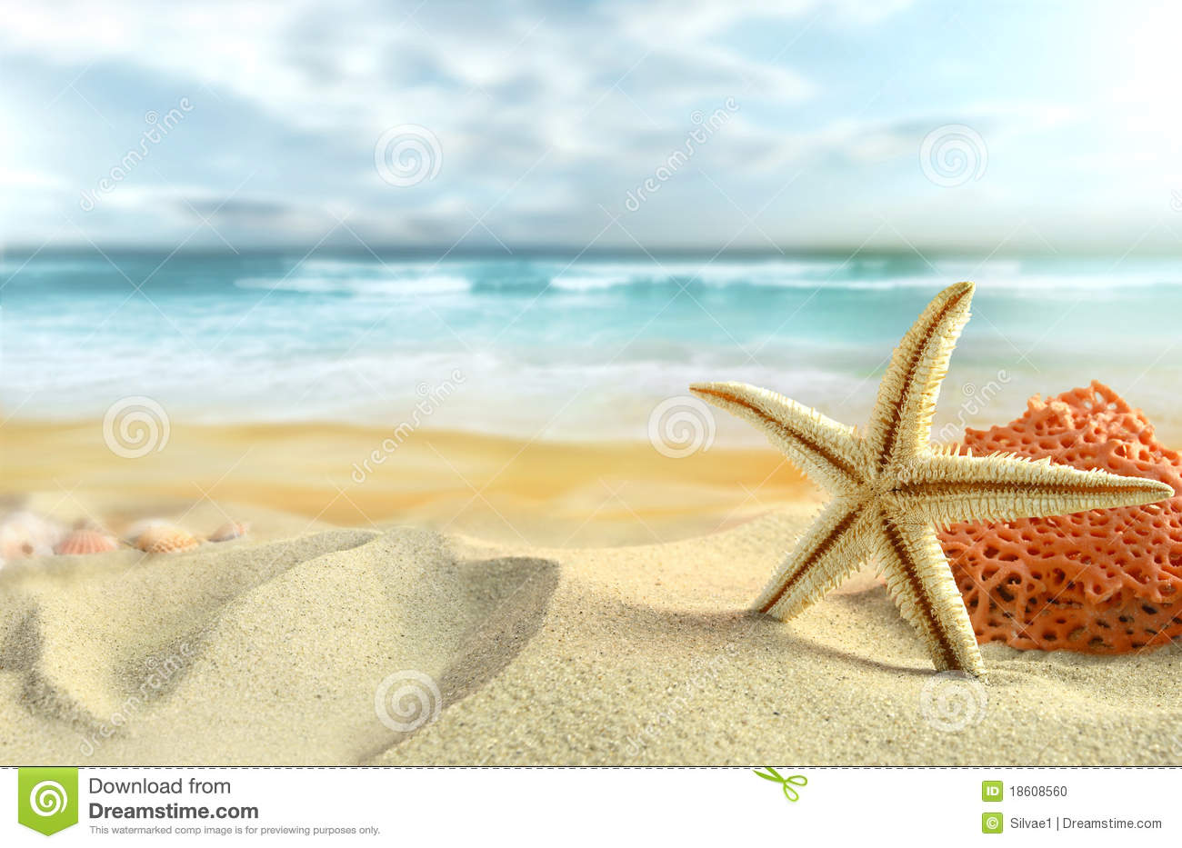 Starfish Stock Photos - Royalty Free Images - Dreamstime