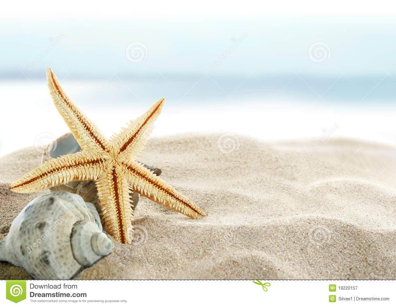Starfish On The Beach Royalty Free Stock Photography ...
