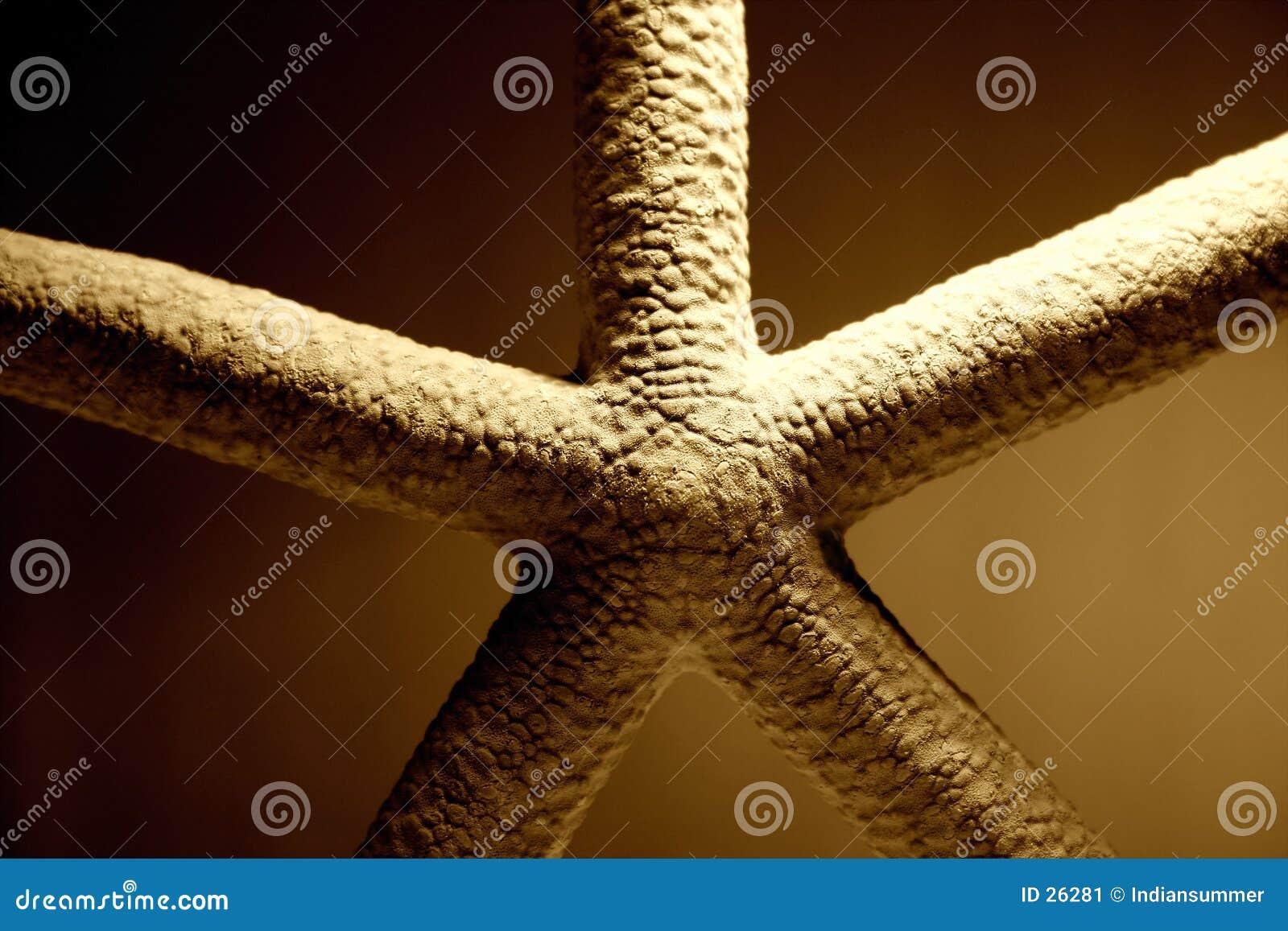 Starfish close-up