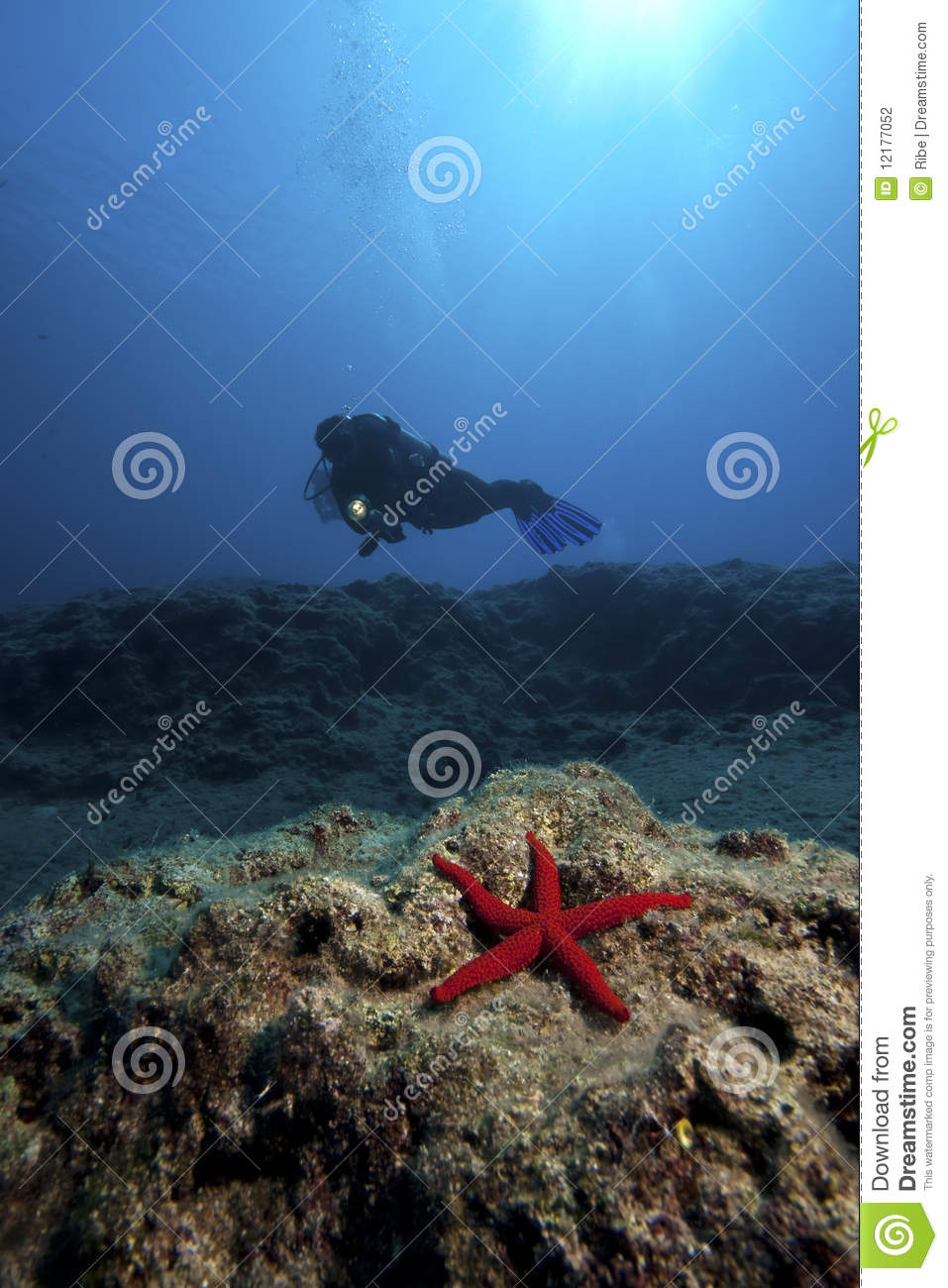 Starfish & Diver in deep water