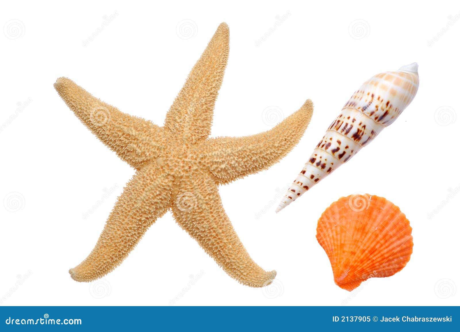 Starfish e Seashells