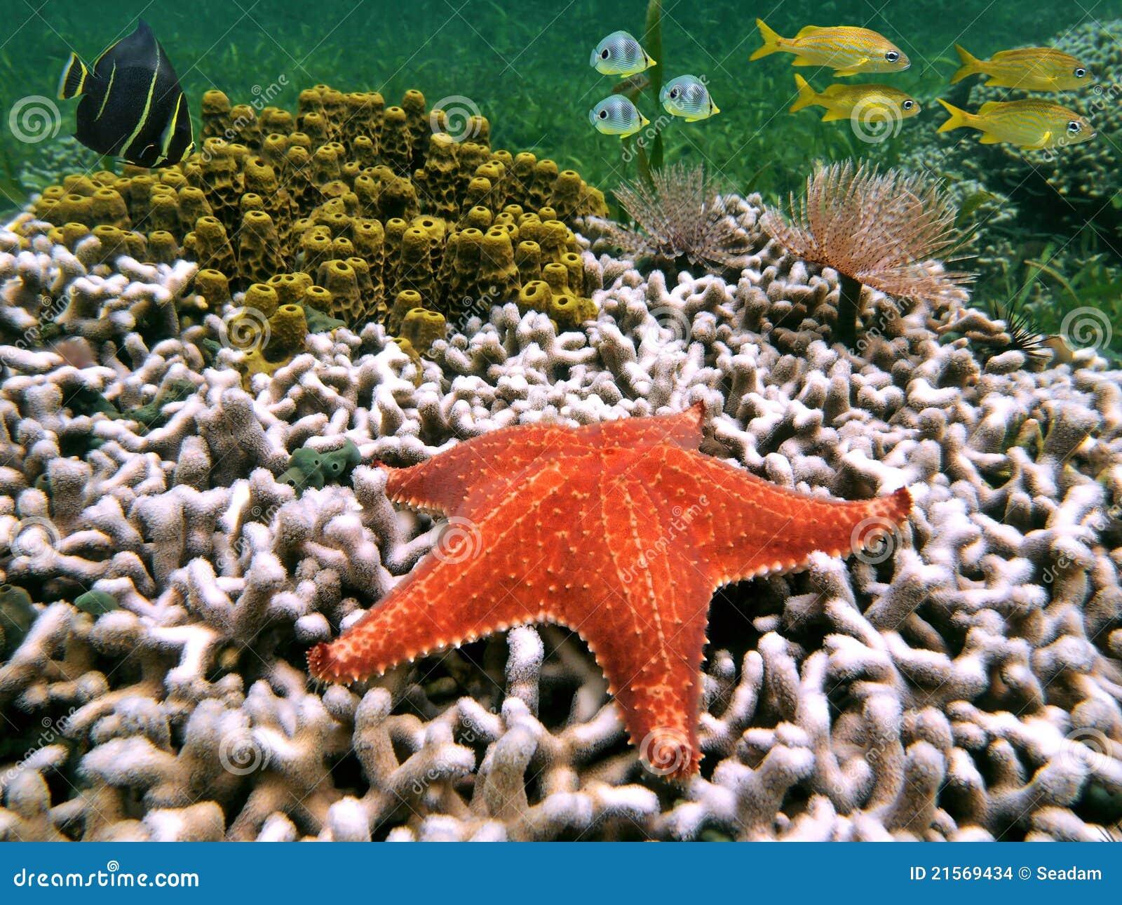 Starfish and fish stock photo. Image of nature, ecosystem - 21569434