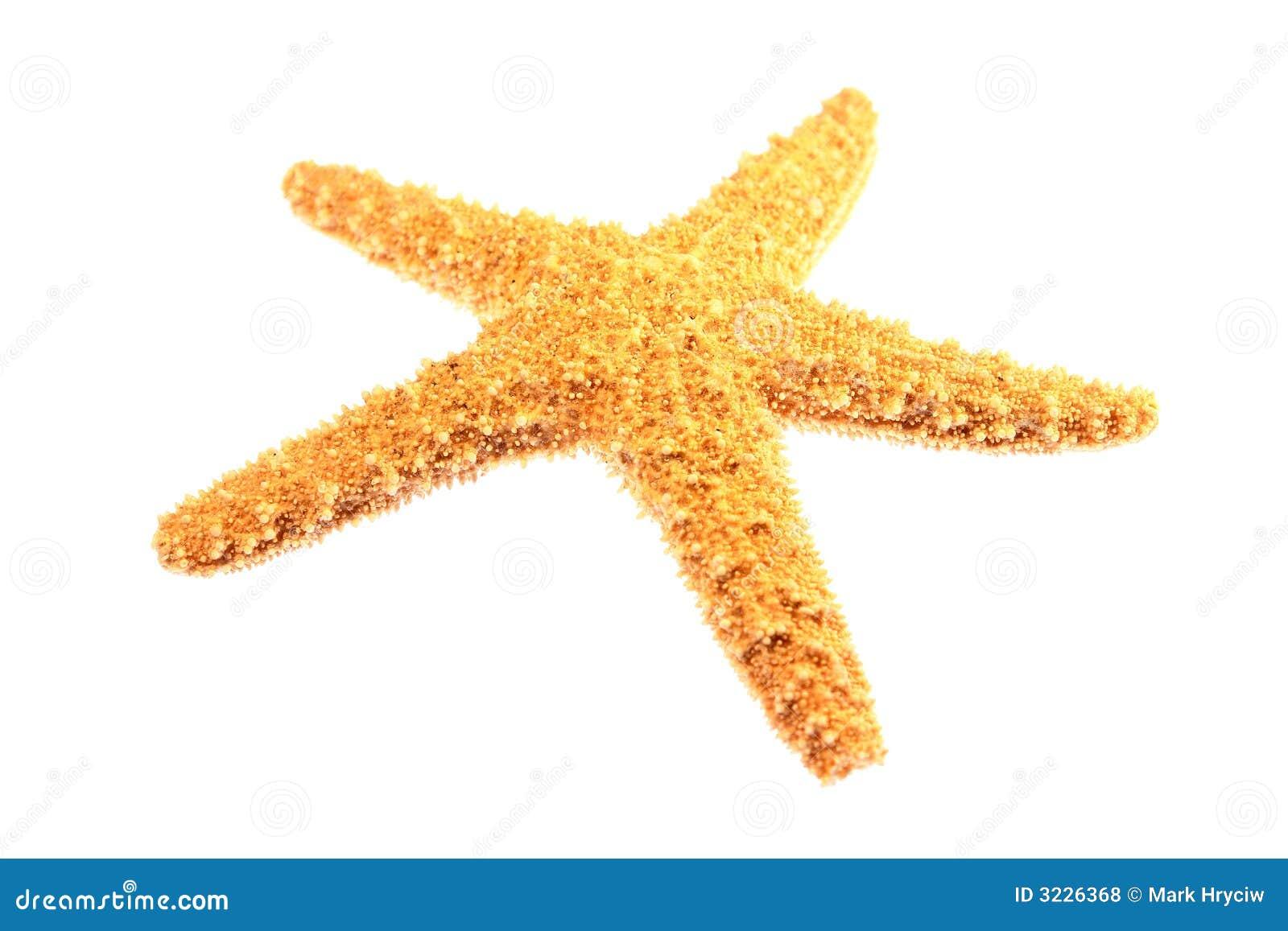 Download Starfish Isolated stock photo. Image of shore, fish, white - 3226368