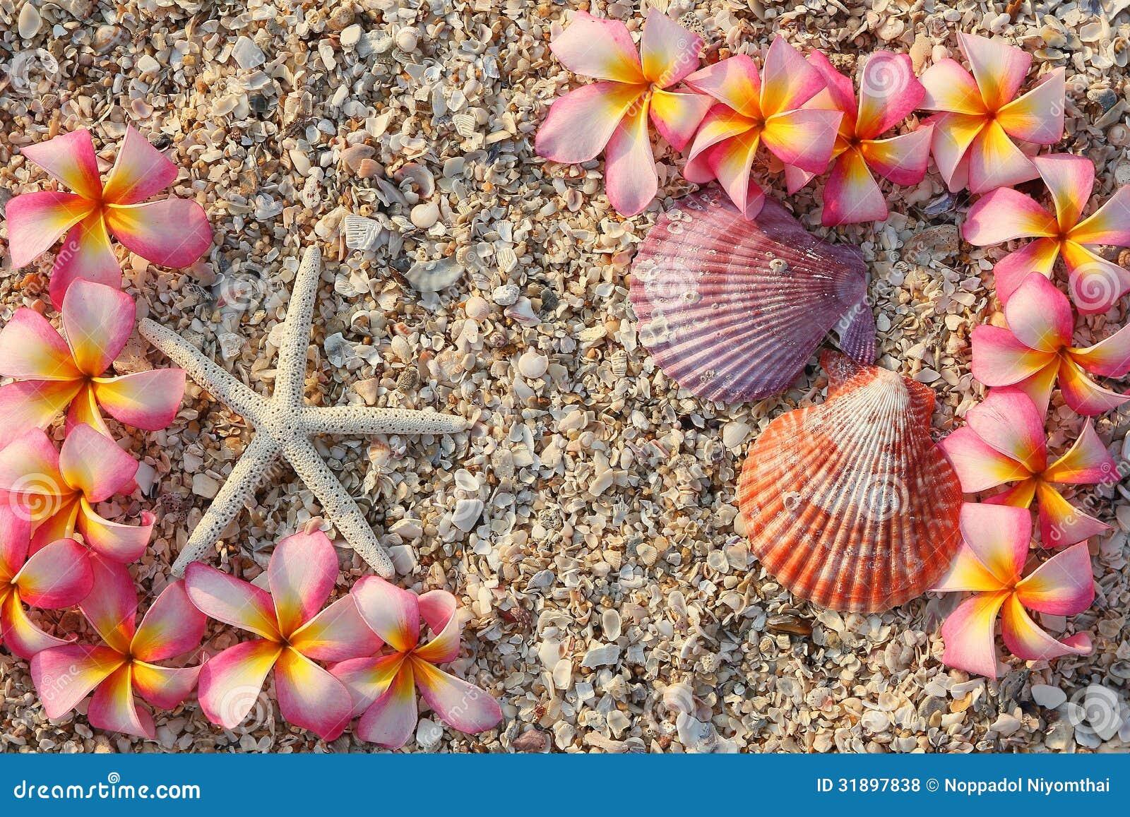 Starfish And Leelawadee Flower Royalty Free Stock Photos ... Leelawadee