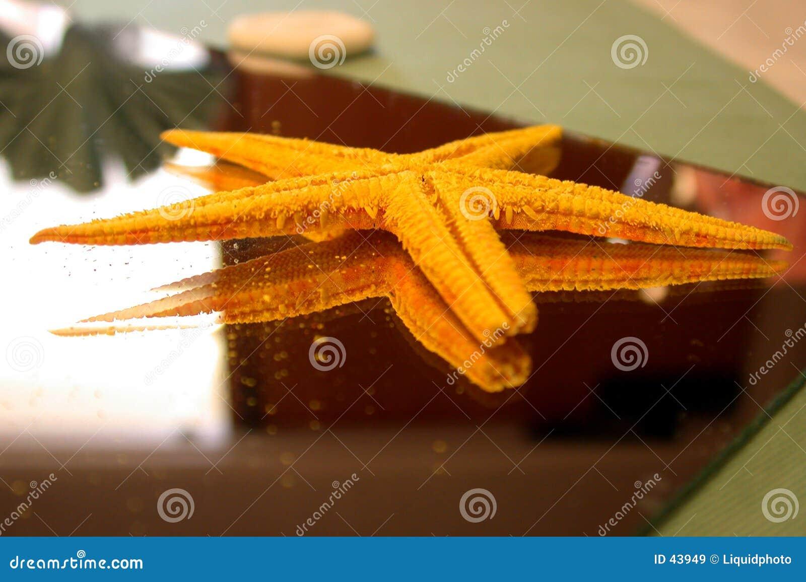 Starfish on Mirror