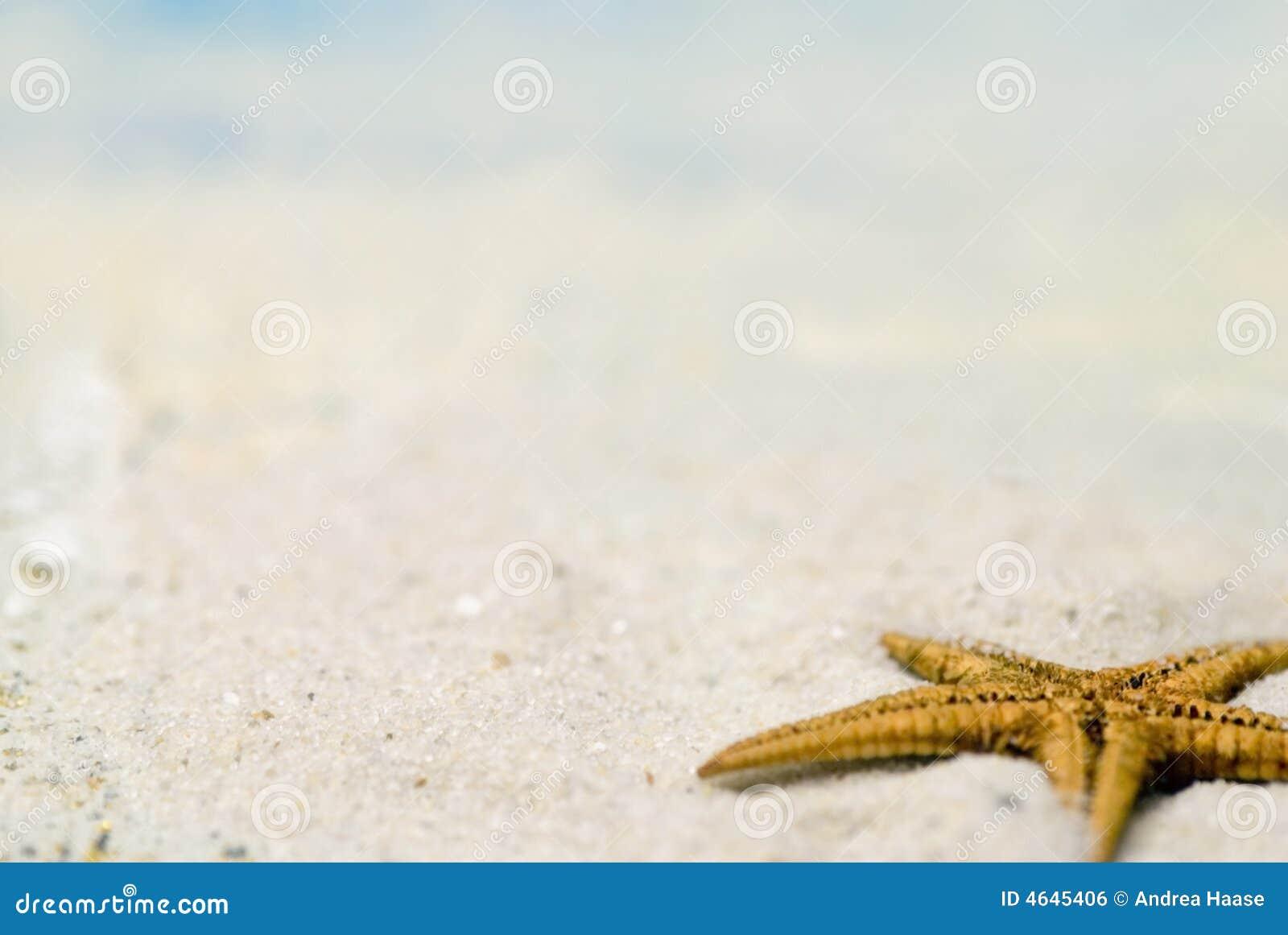 Starfish na praia arenosa