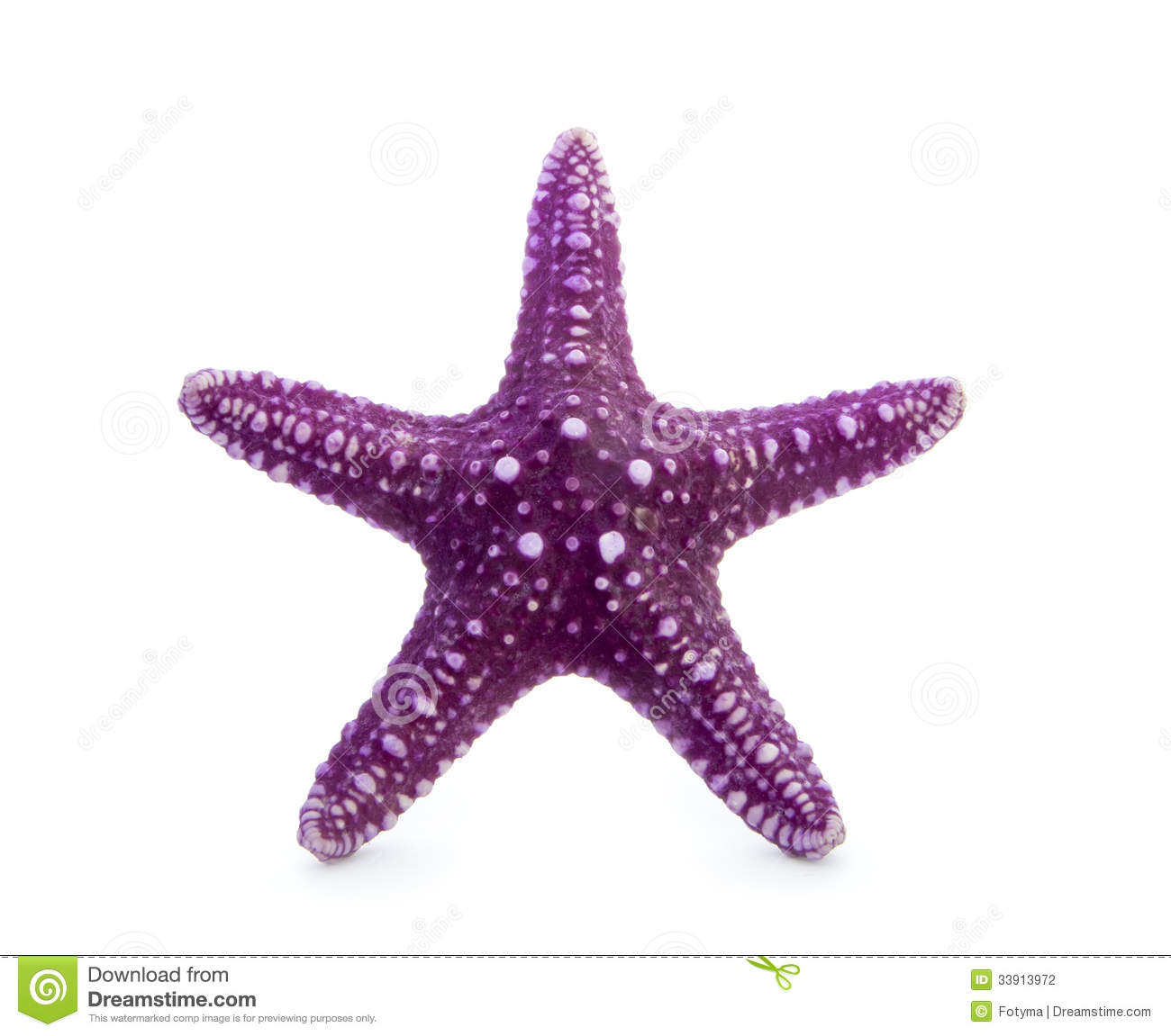 Purple starfish isolated on white background.