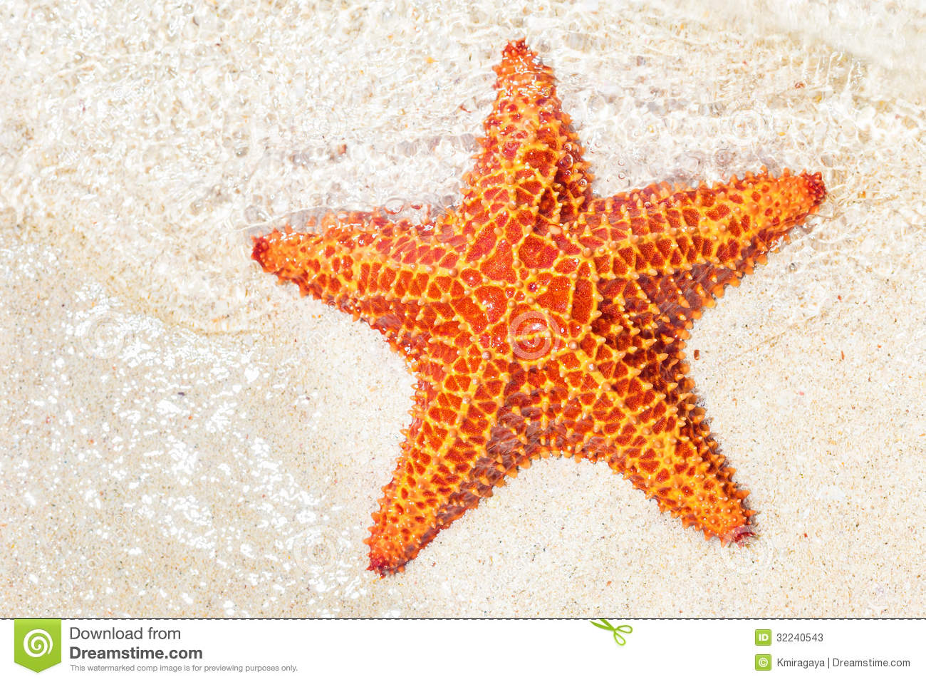 Starfish (sea Star) Near The Shore Of A Tropical Beach