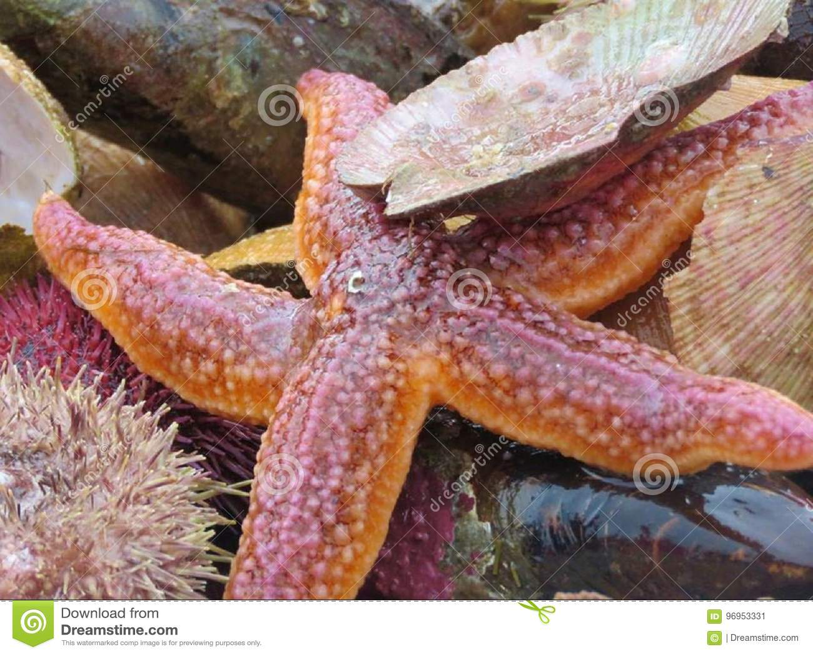 Starfish and sealife