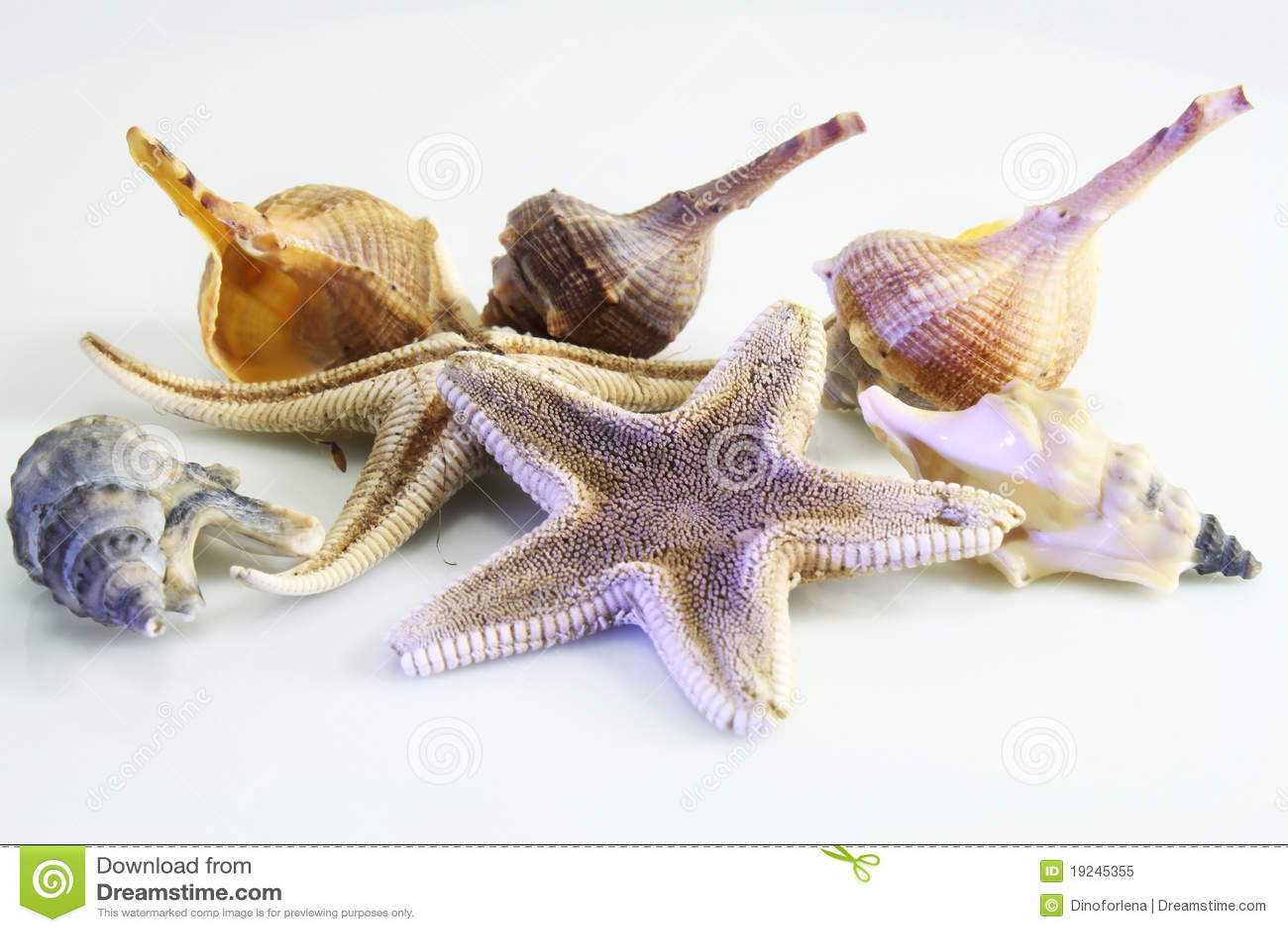 Starfish seashells