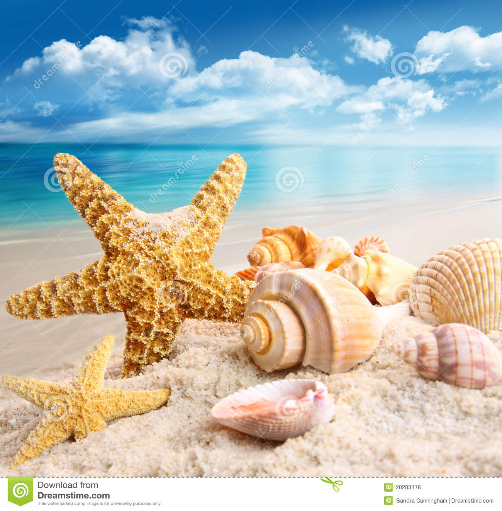 royalty free stock photos starfish seashells beach image