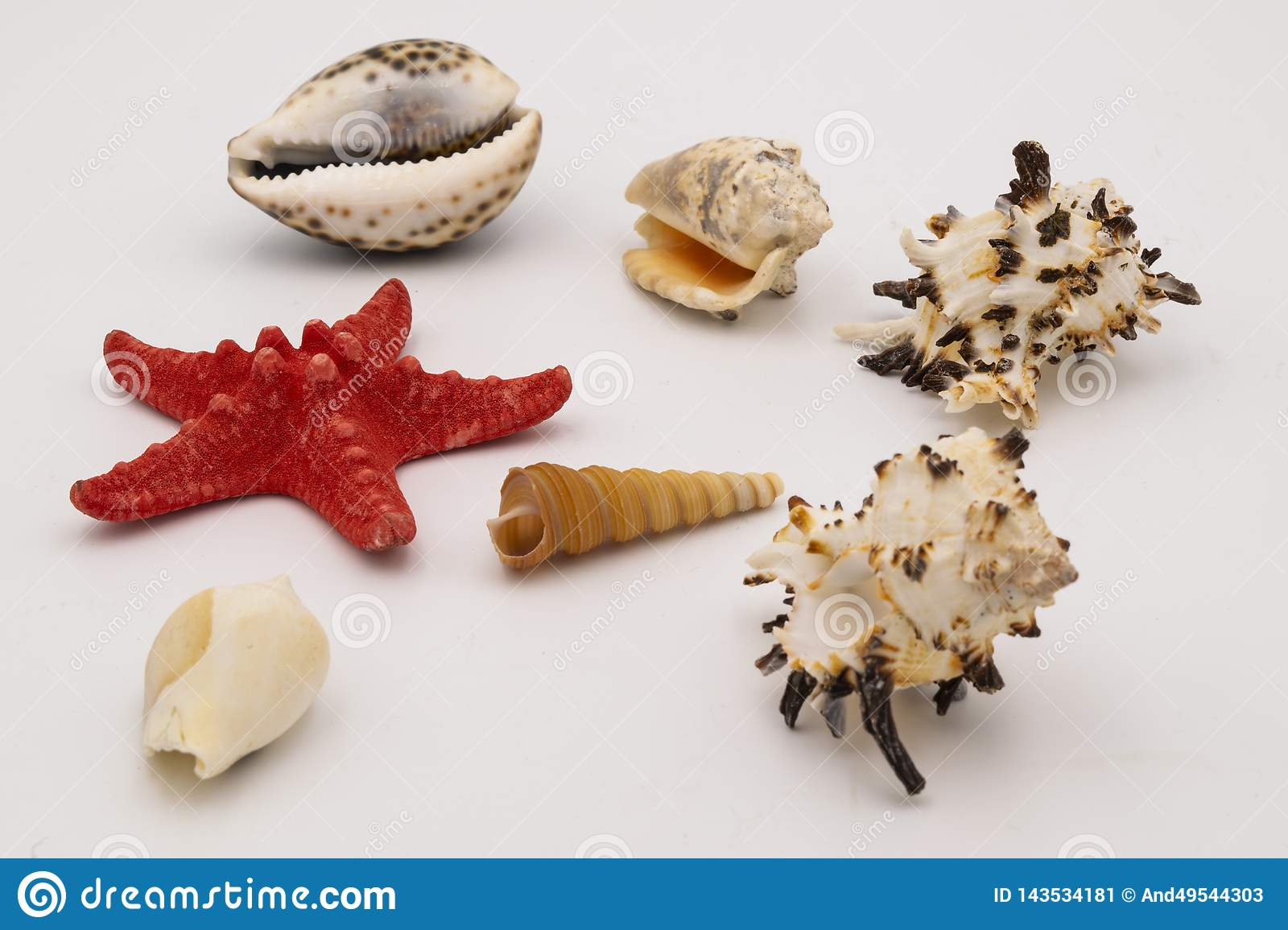 Starfish and seashells on the white table.